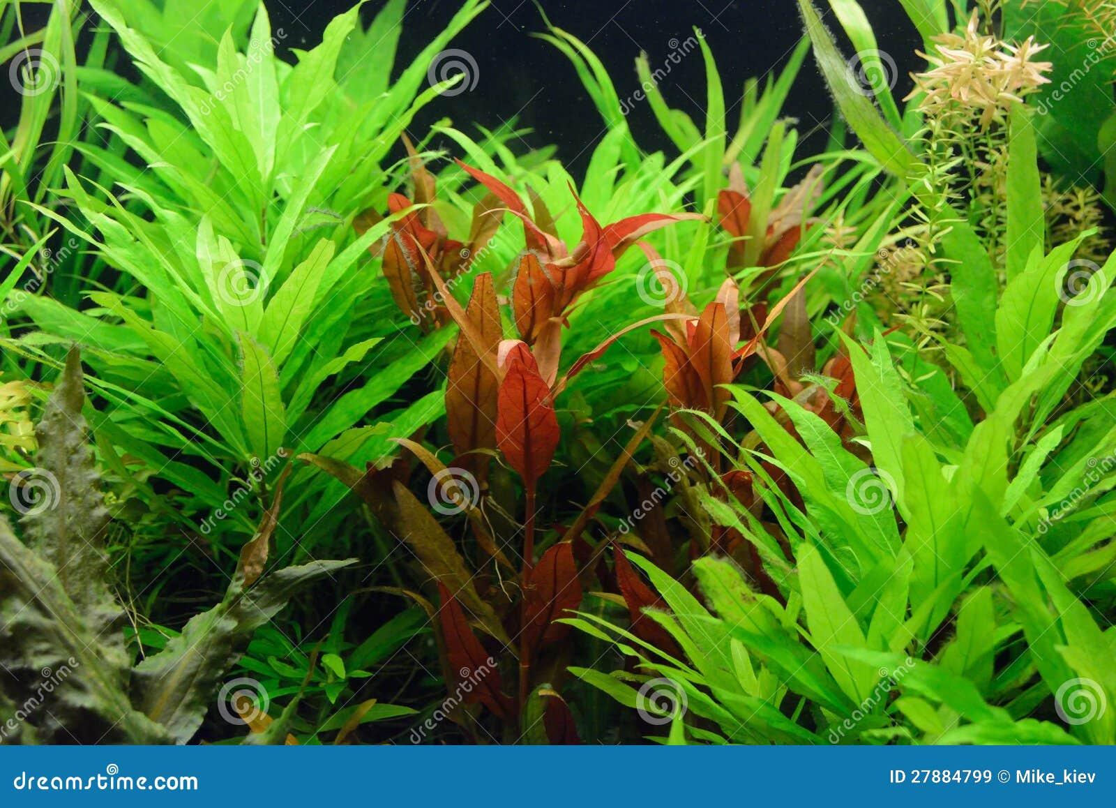 De decoratie van het aquarium royalty vrije stock afbeeldingen beeld 27884799 - Decoratie van de kamers van de meiden ...