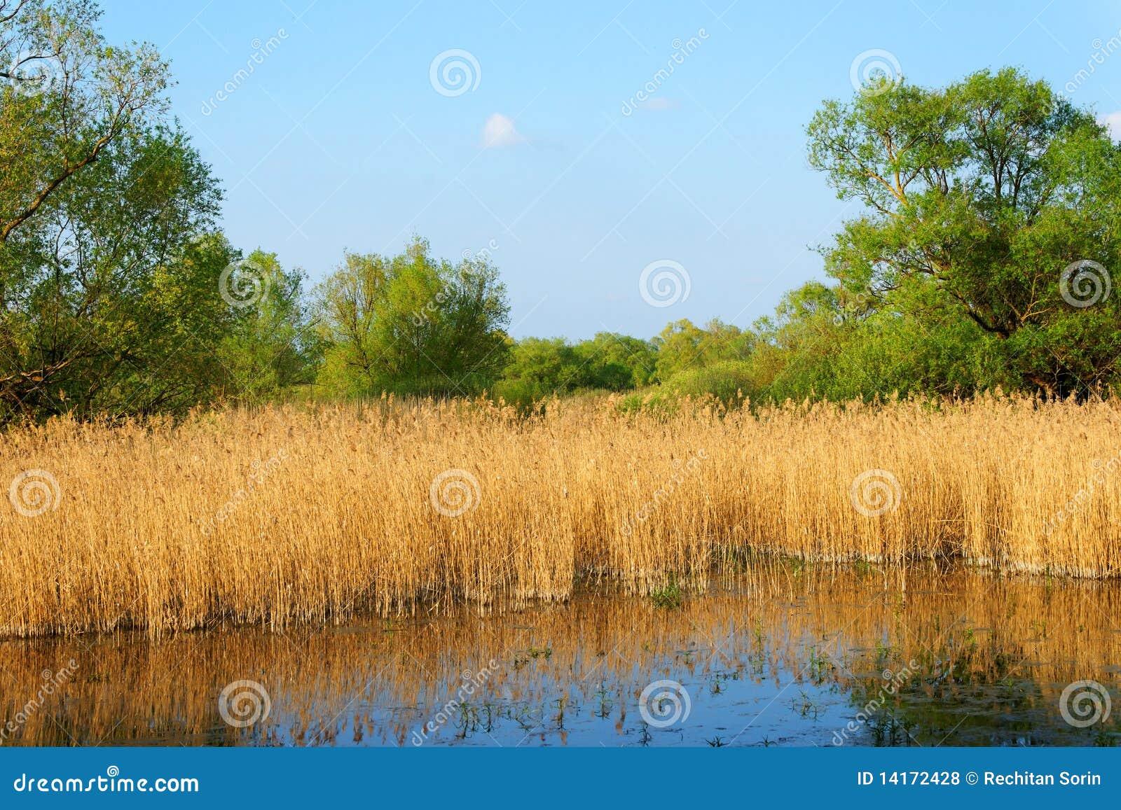De Delta van Donau