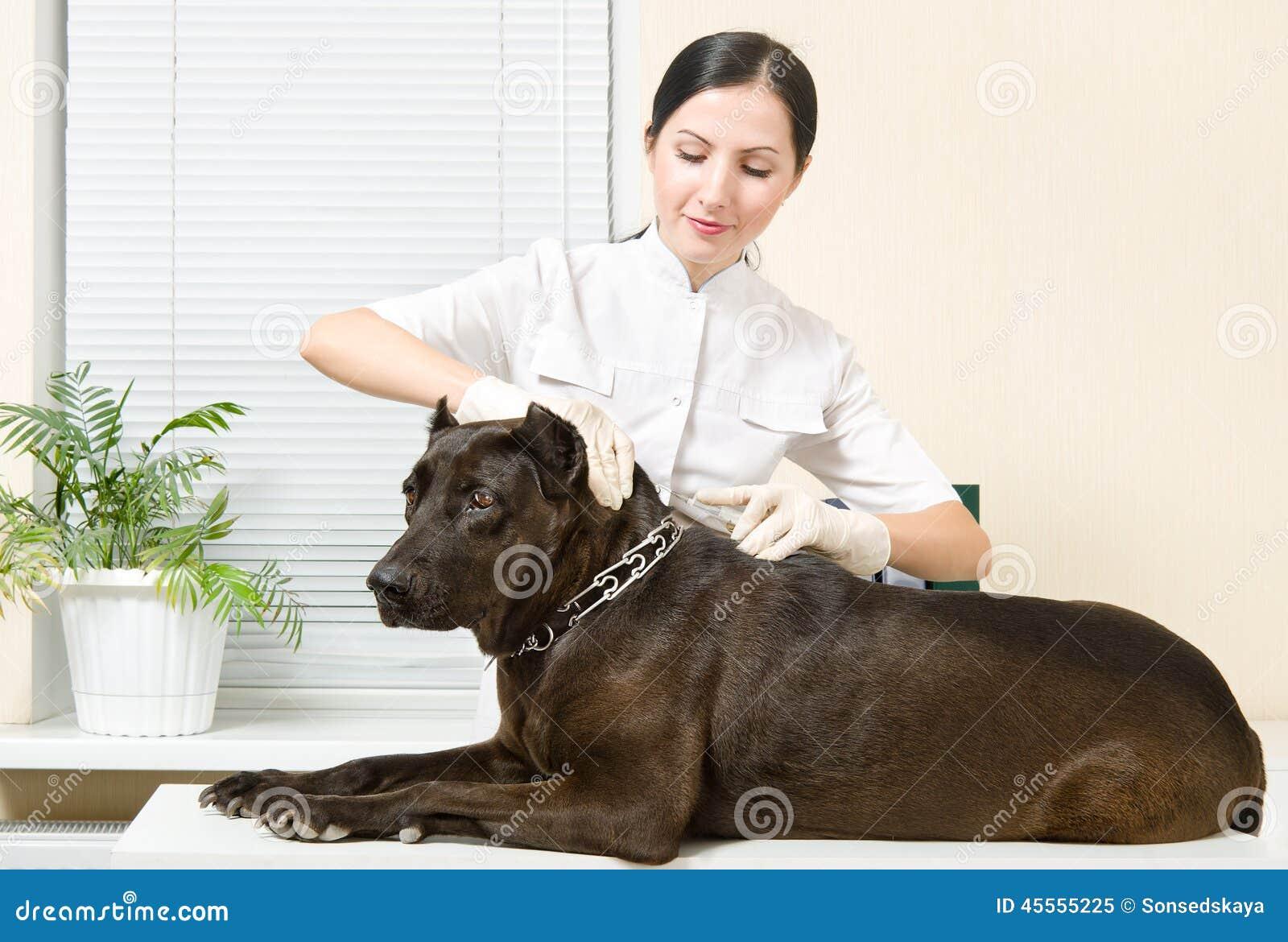 De dierenarts maakt een injectiehond
