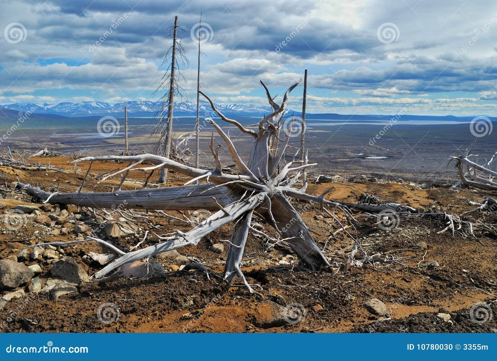 De dode boom