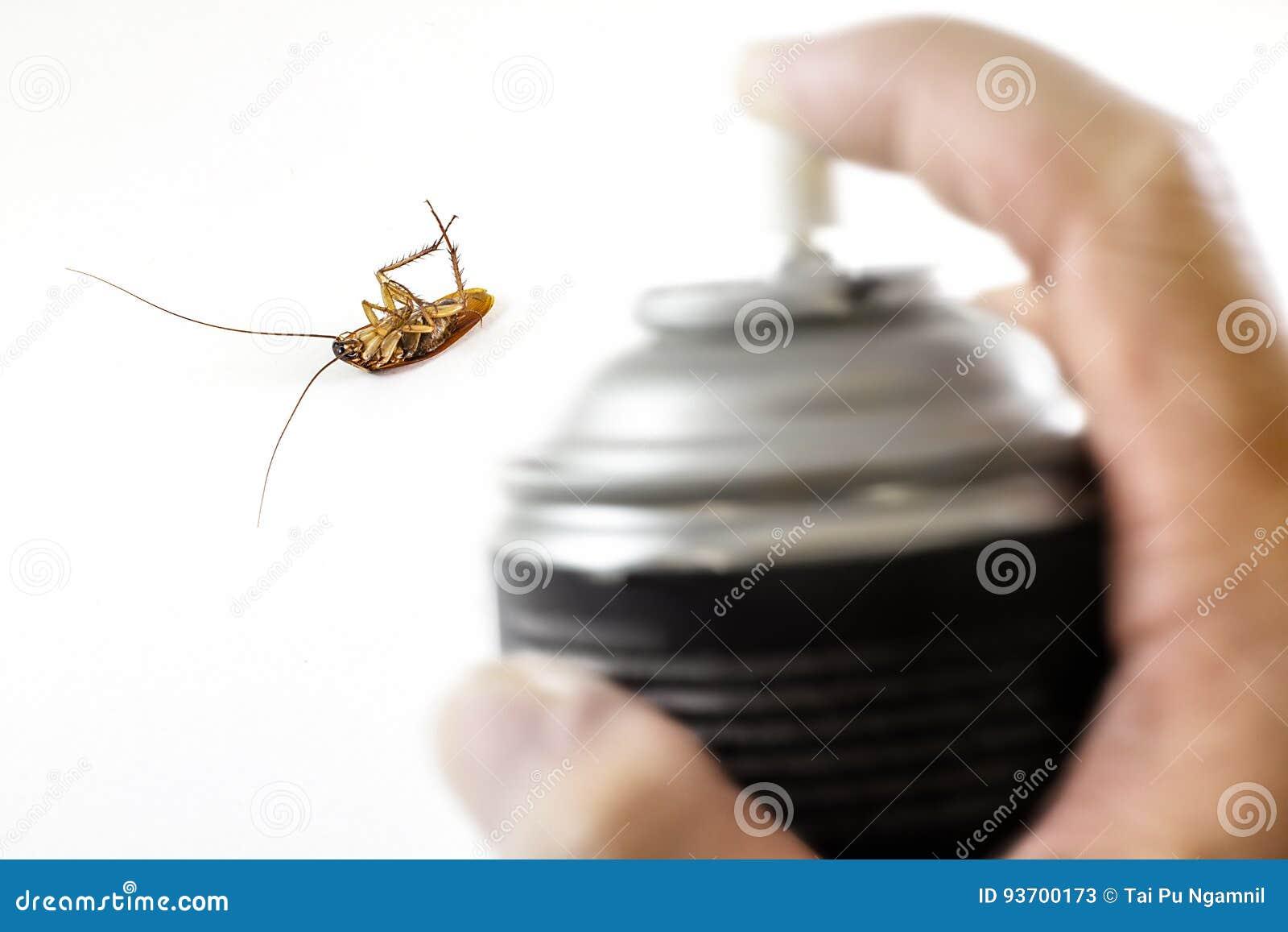 De dode kakkerlak, Gedood door ongediertebestrijding met zwarte nevel in h
