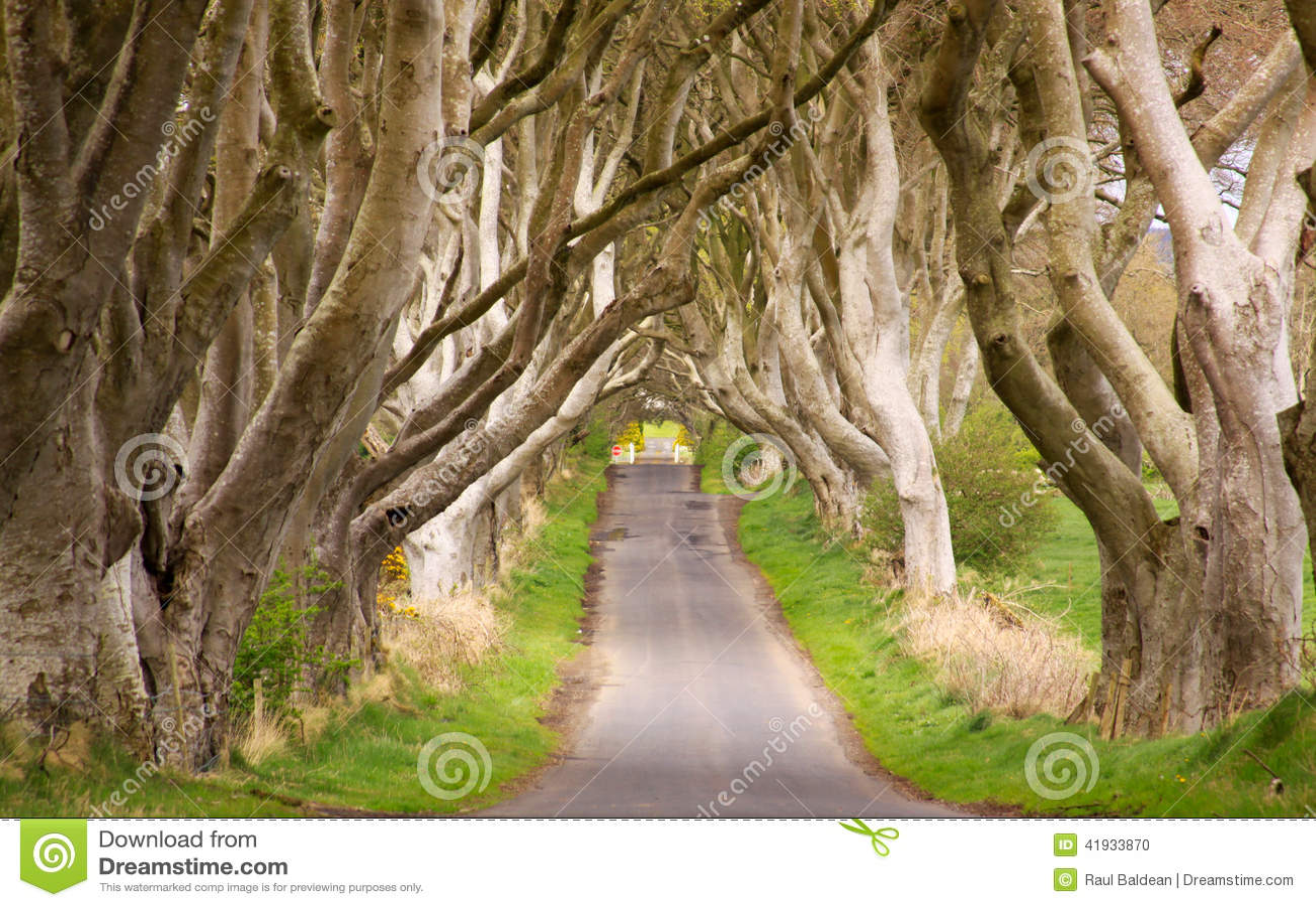 De Donkere Hagen, Noord-Ierland