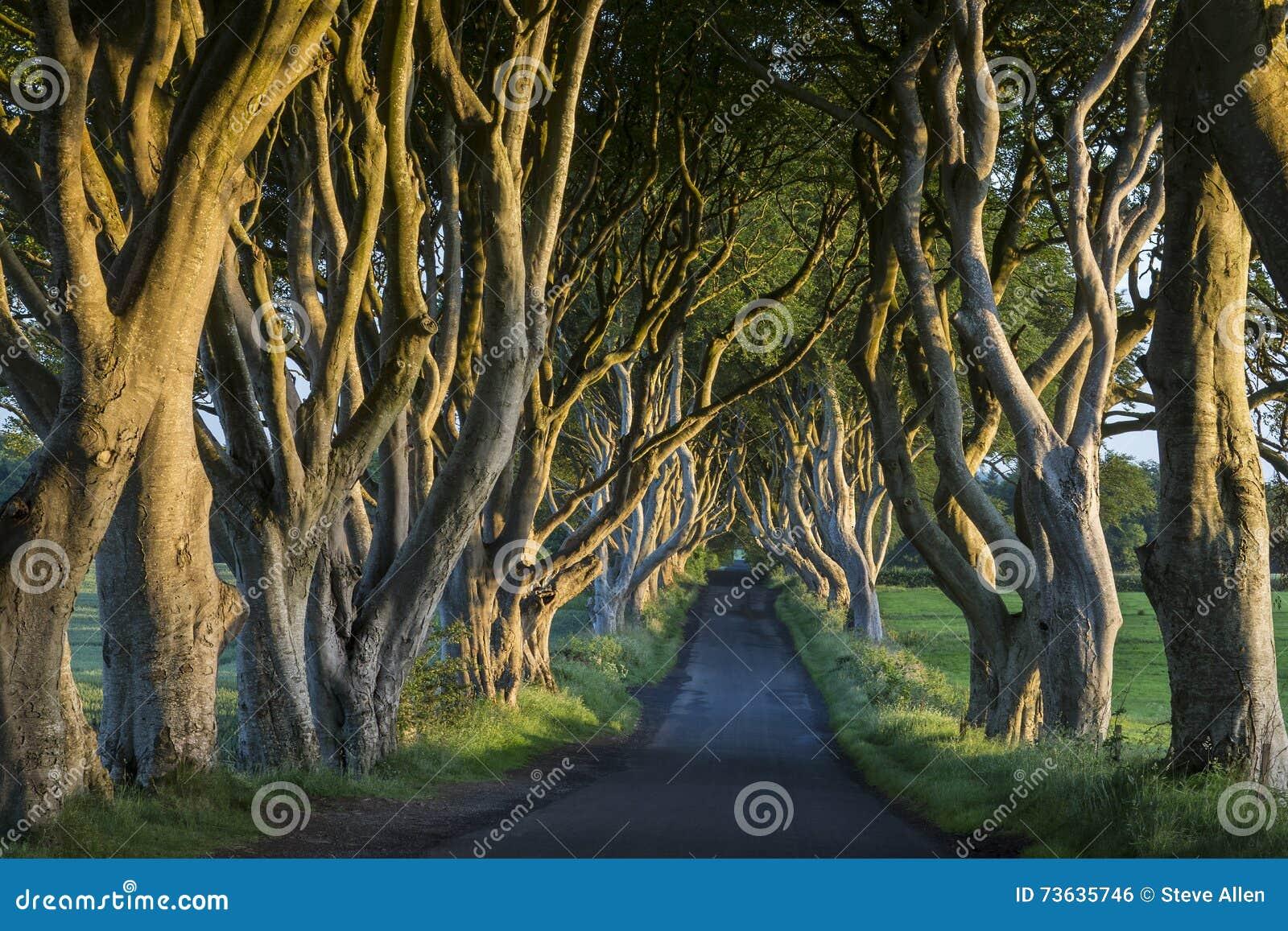 De Donkere Hagen - Provincie Antrim - Noord-Ierland