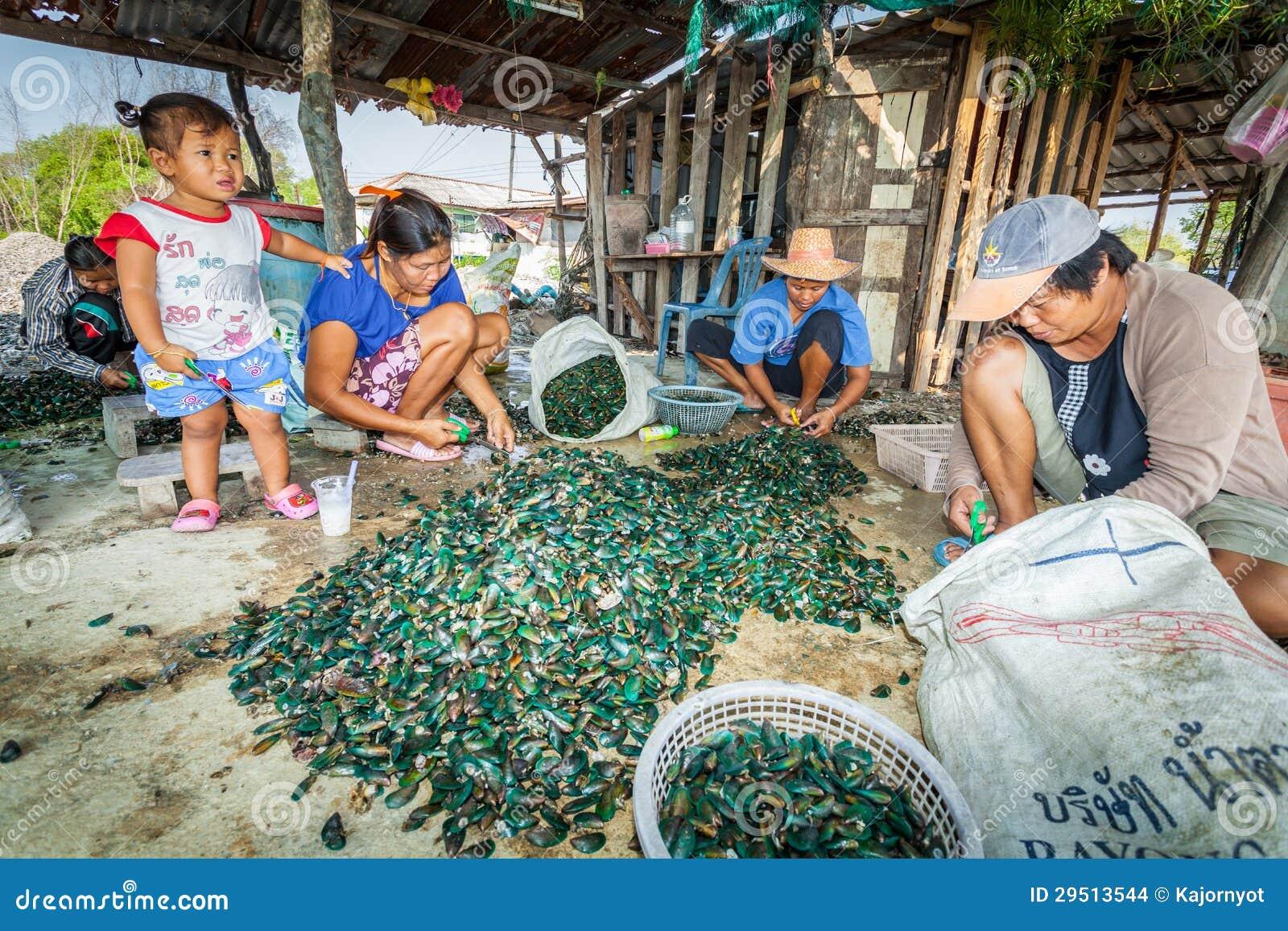 De dorpsbewoner maakt een Aziatische groene mossel schoon