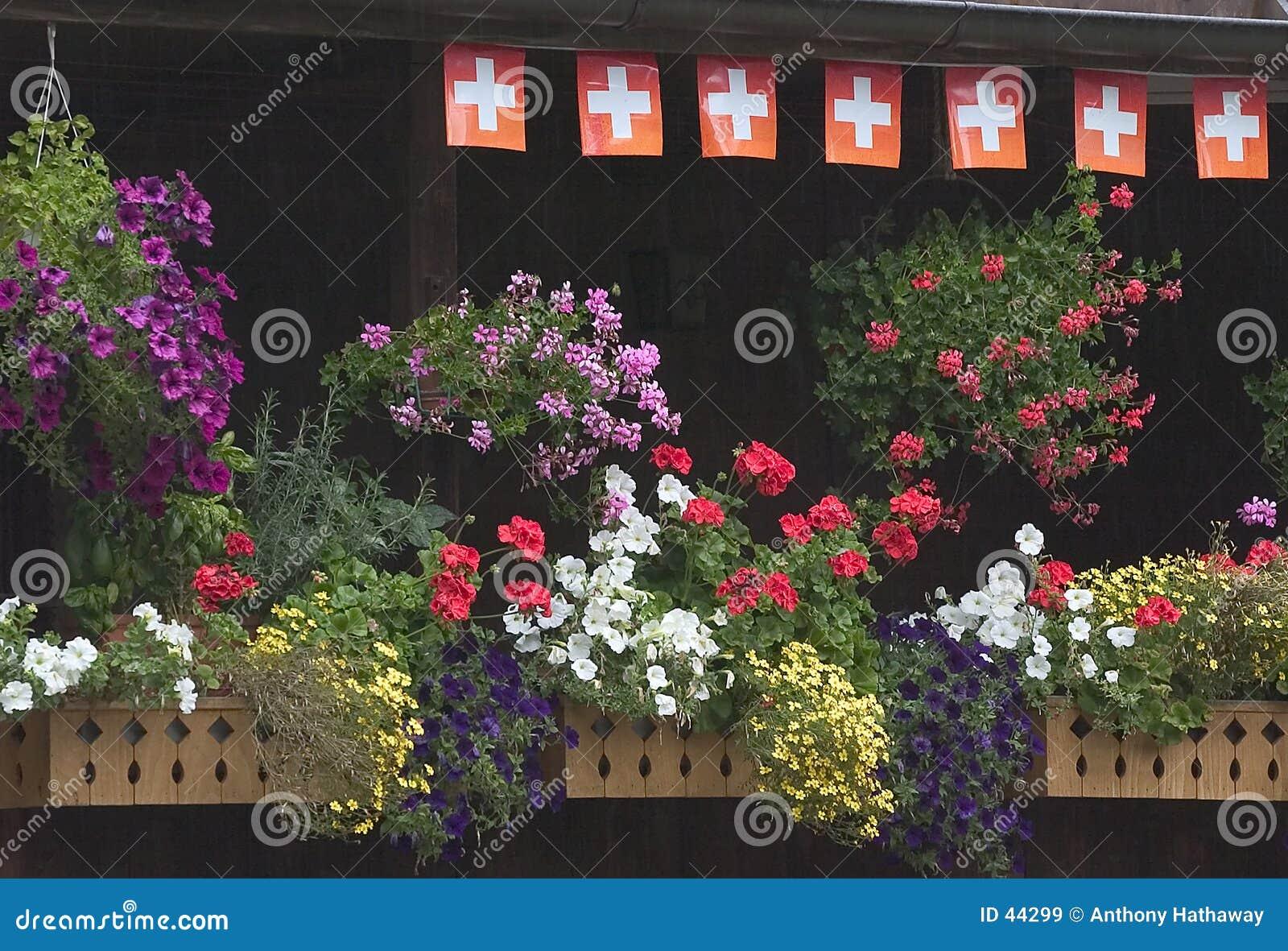 De dozen van de bloem op Zwitsers balkon