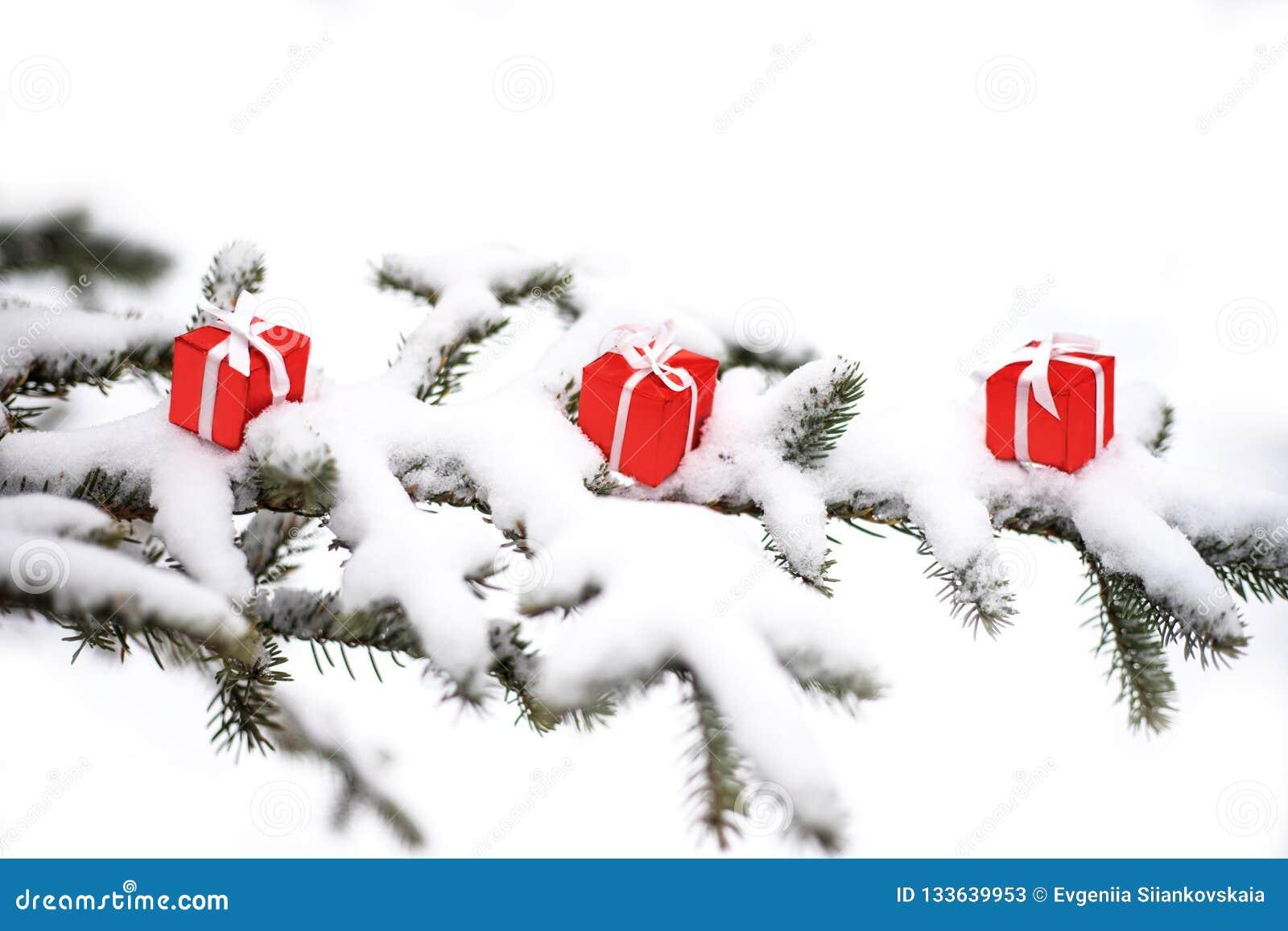 De dozen van de Kerstmisgift en sneeuwspar