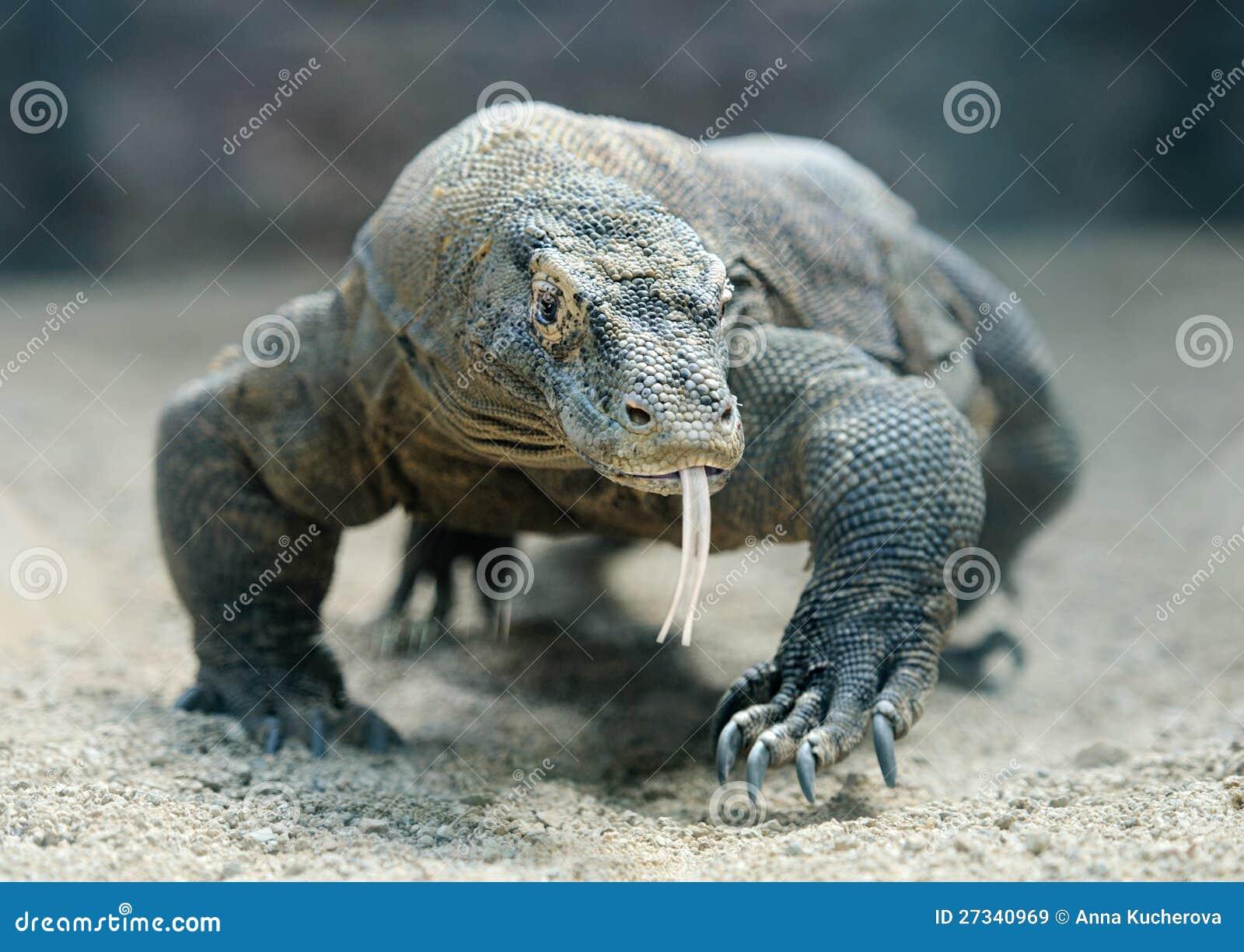 De draak van Komodo