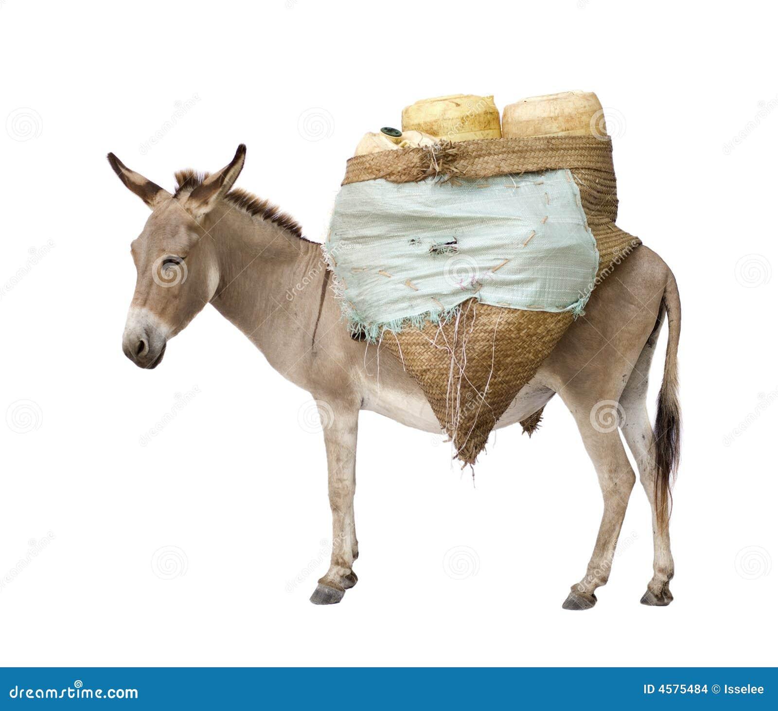 De dragende levering van de ezel