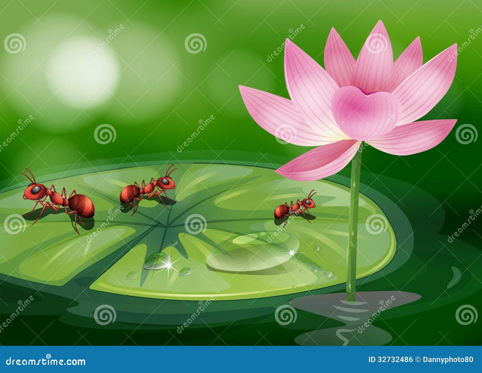 De drie mieren boven planten waterlily