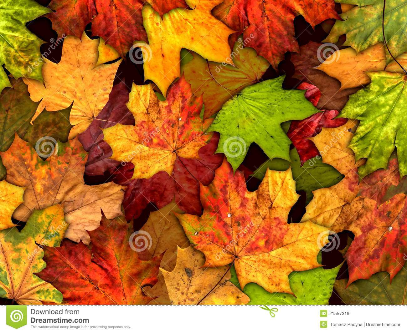 autumn hd wallpaper for iphone 6