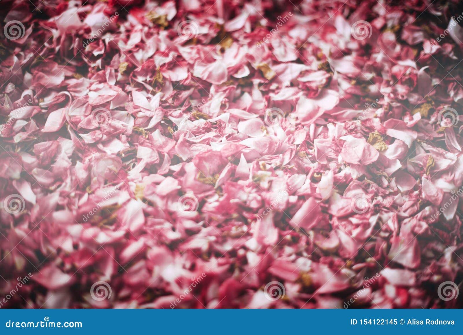 De droge bloemblaadjes van een thee namen toe