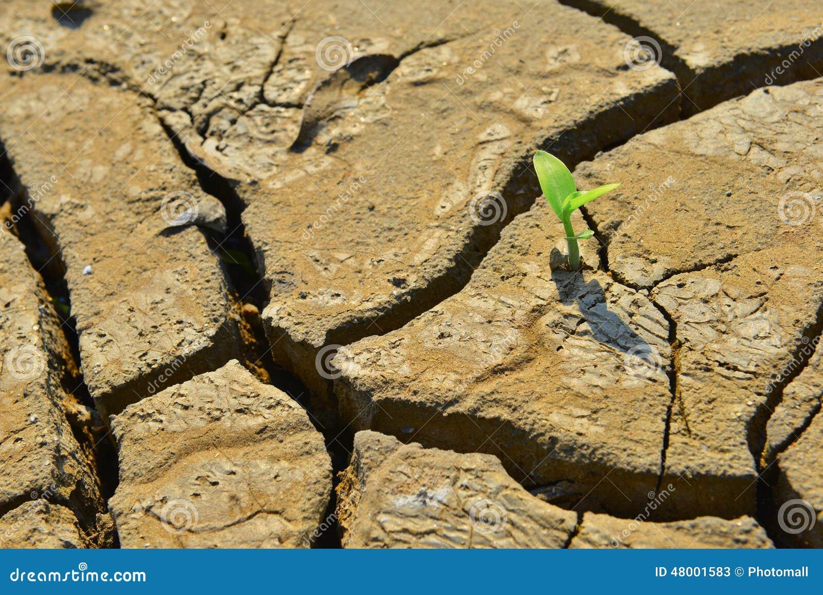 De droge gebarsten land Groene spruit, sluit omhoog, het nieuwe leven, nieuwe hoop, heelt de wereld