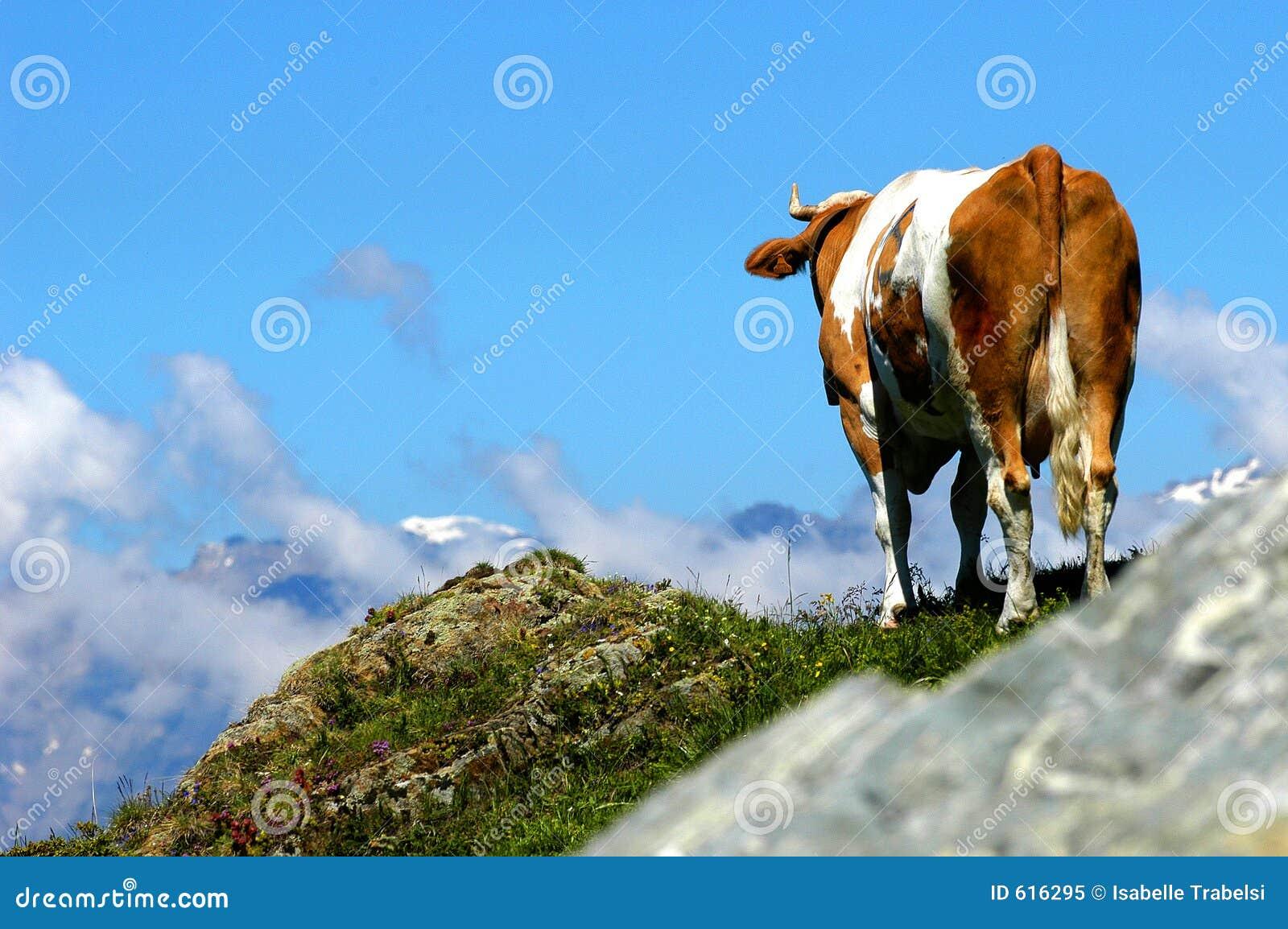 De dromen van de koe om te vliegen