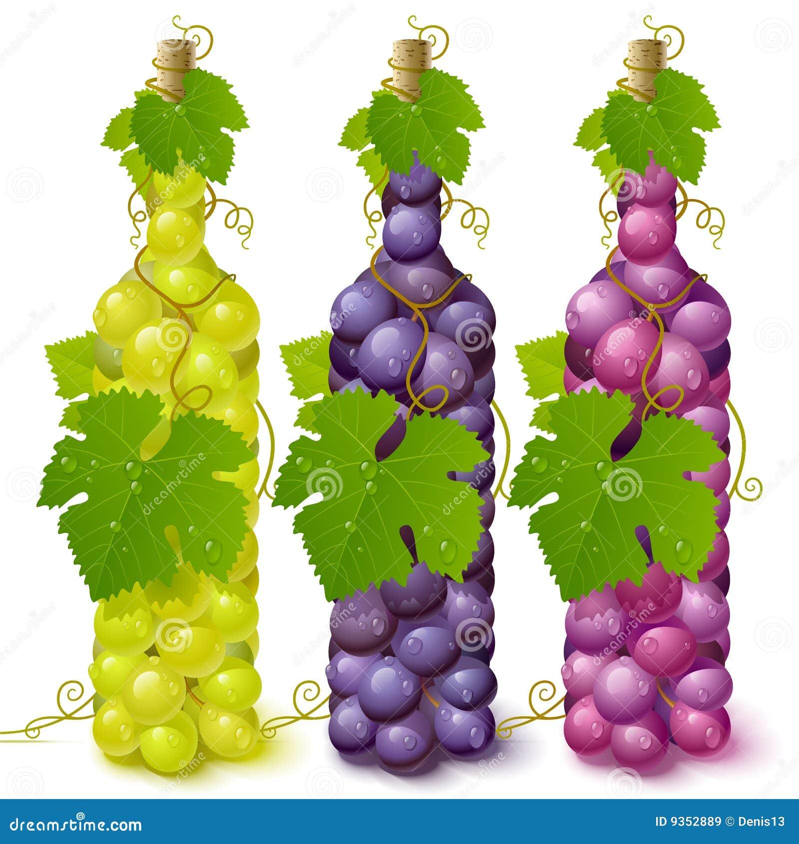 De druivenflessen van de wijnstok