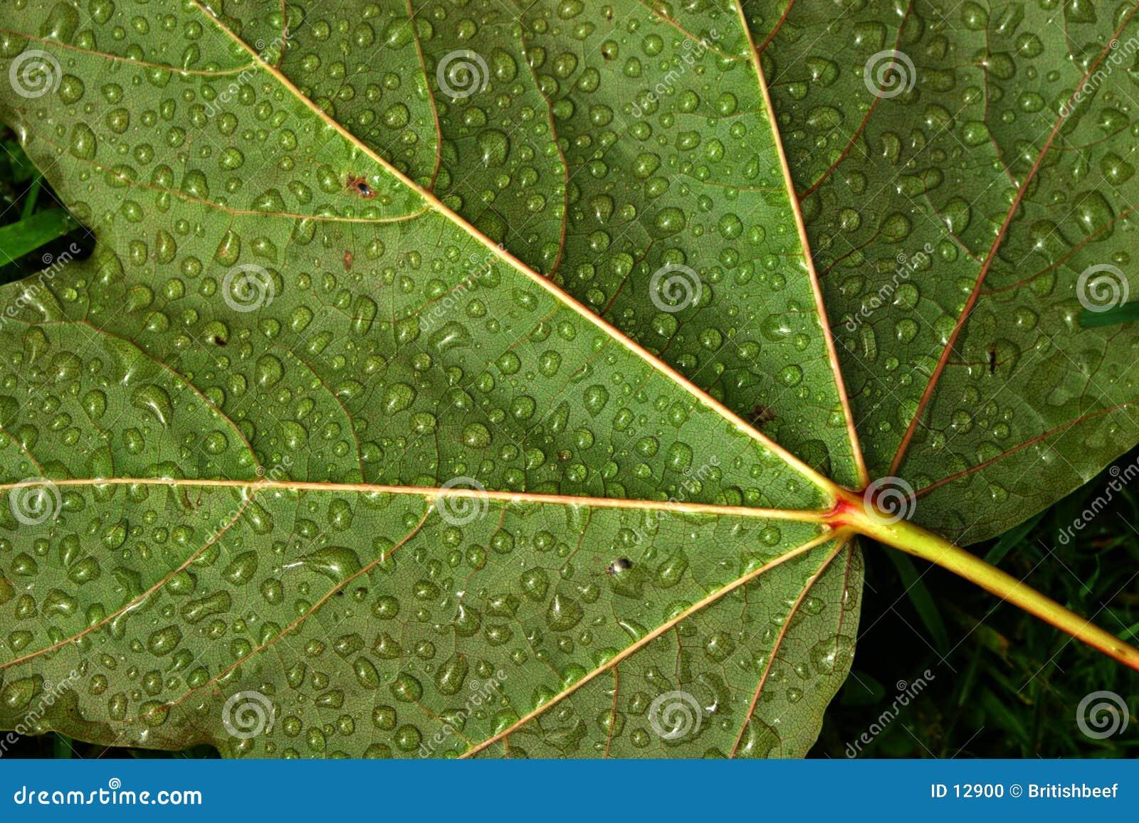 De druppeltjes van het water op blad