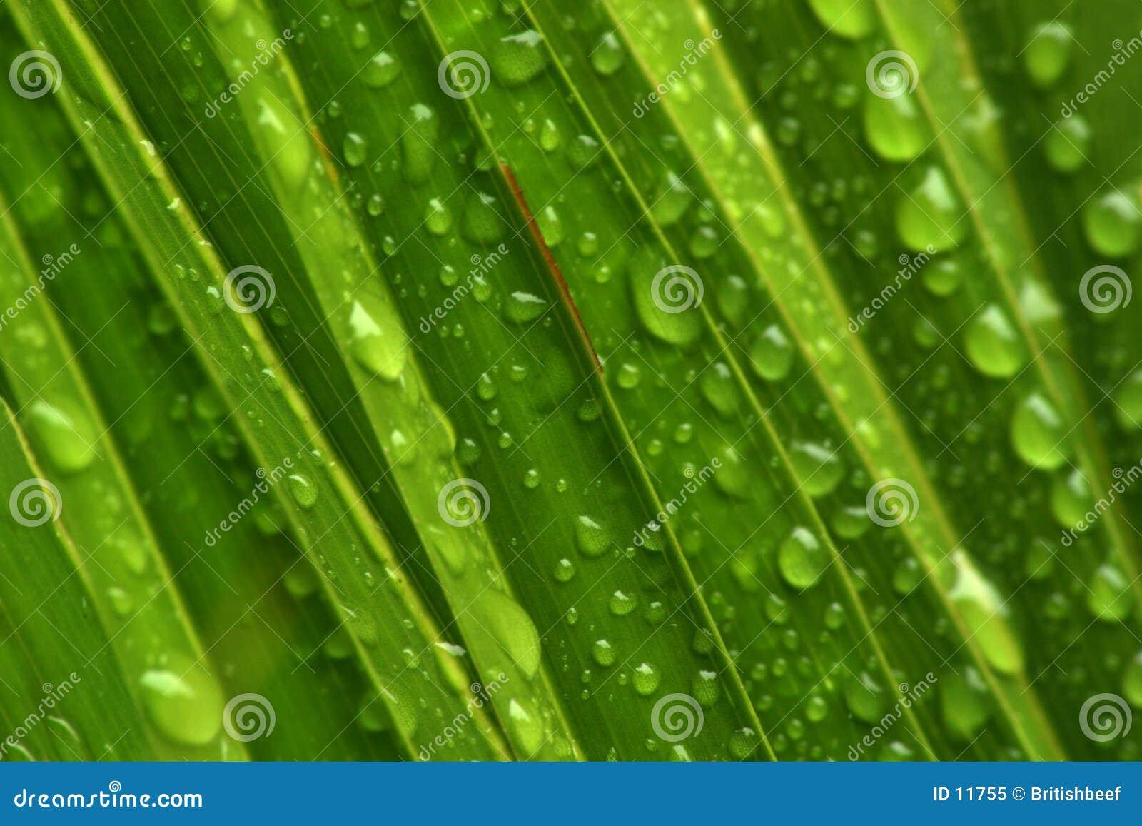 De druppeltjes van het water op groen