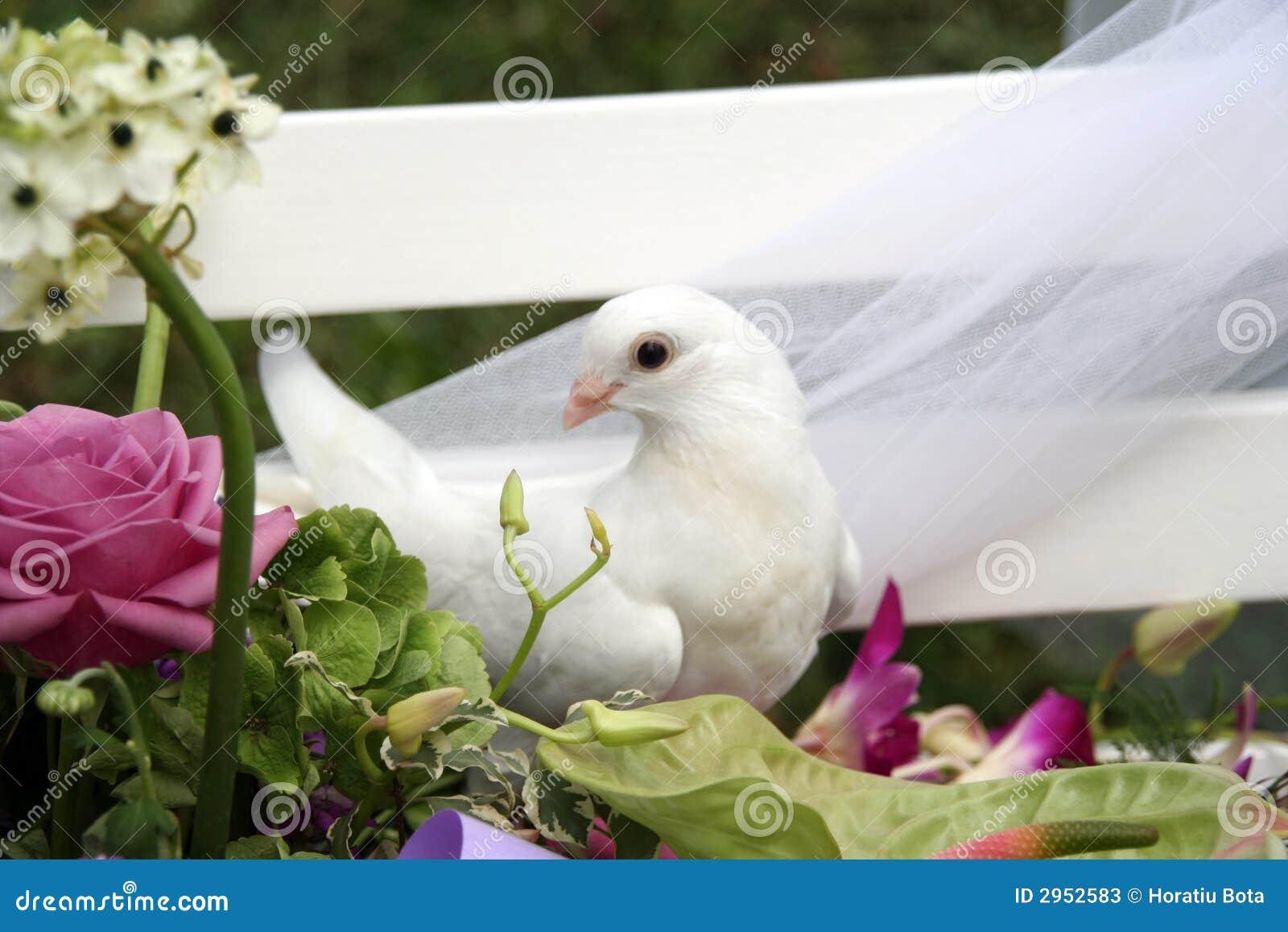 De duif van het huwelijk