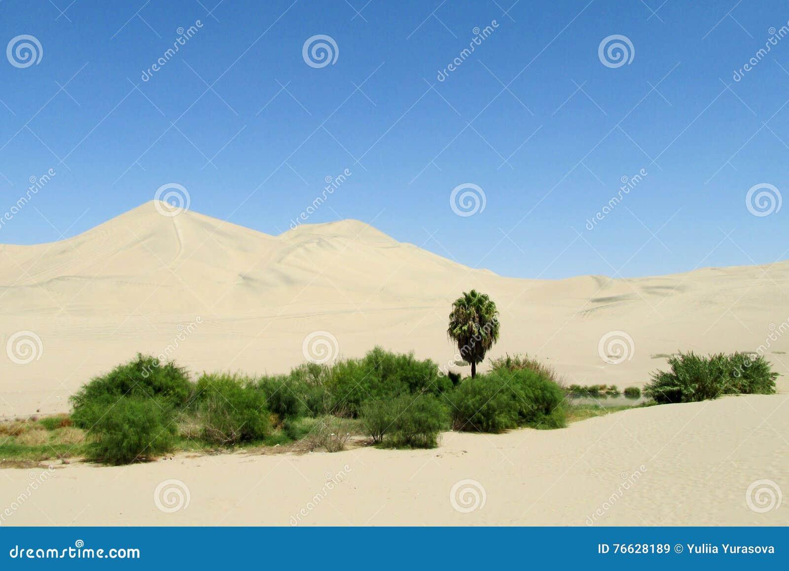 De duinen van de zandwoestijn en groene oase met struiken en palm
