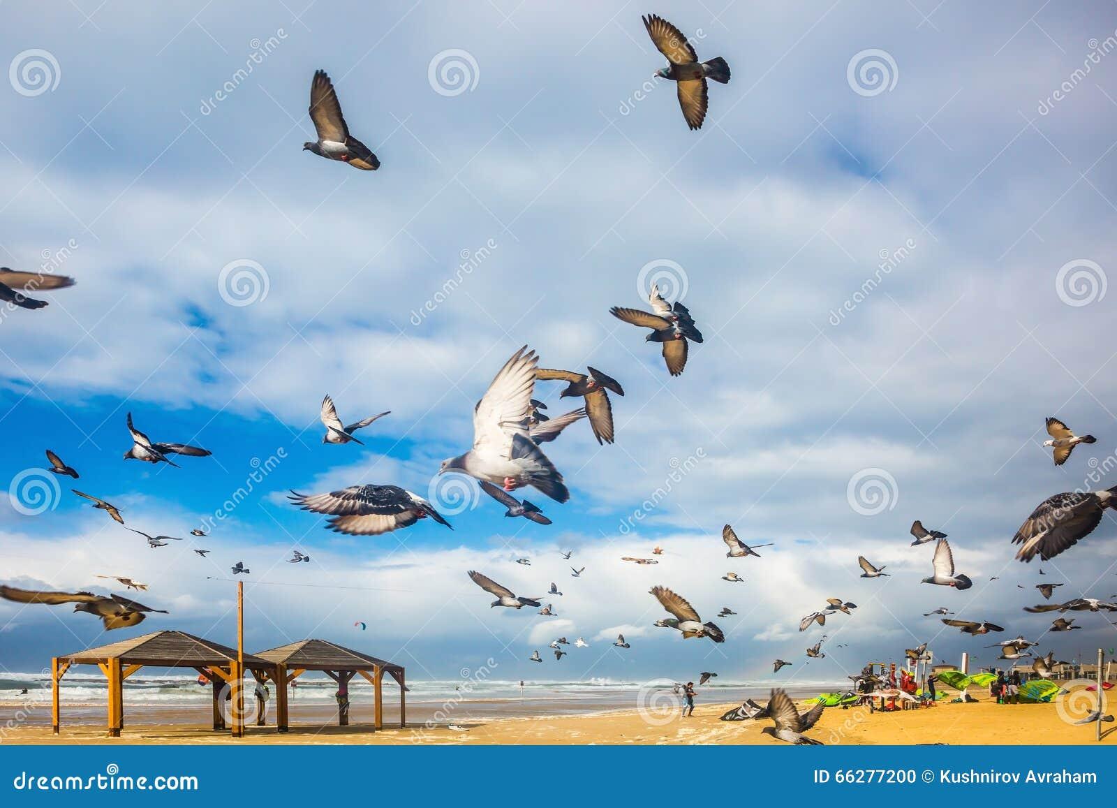 De duiven het is lawaaierig vertrekt van zandig strand