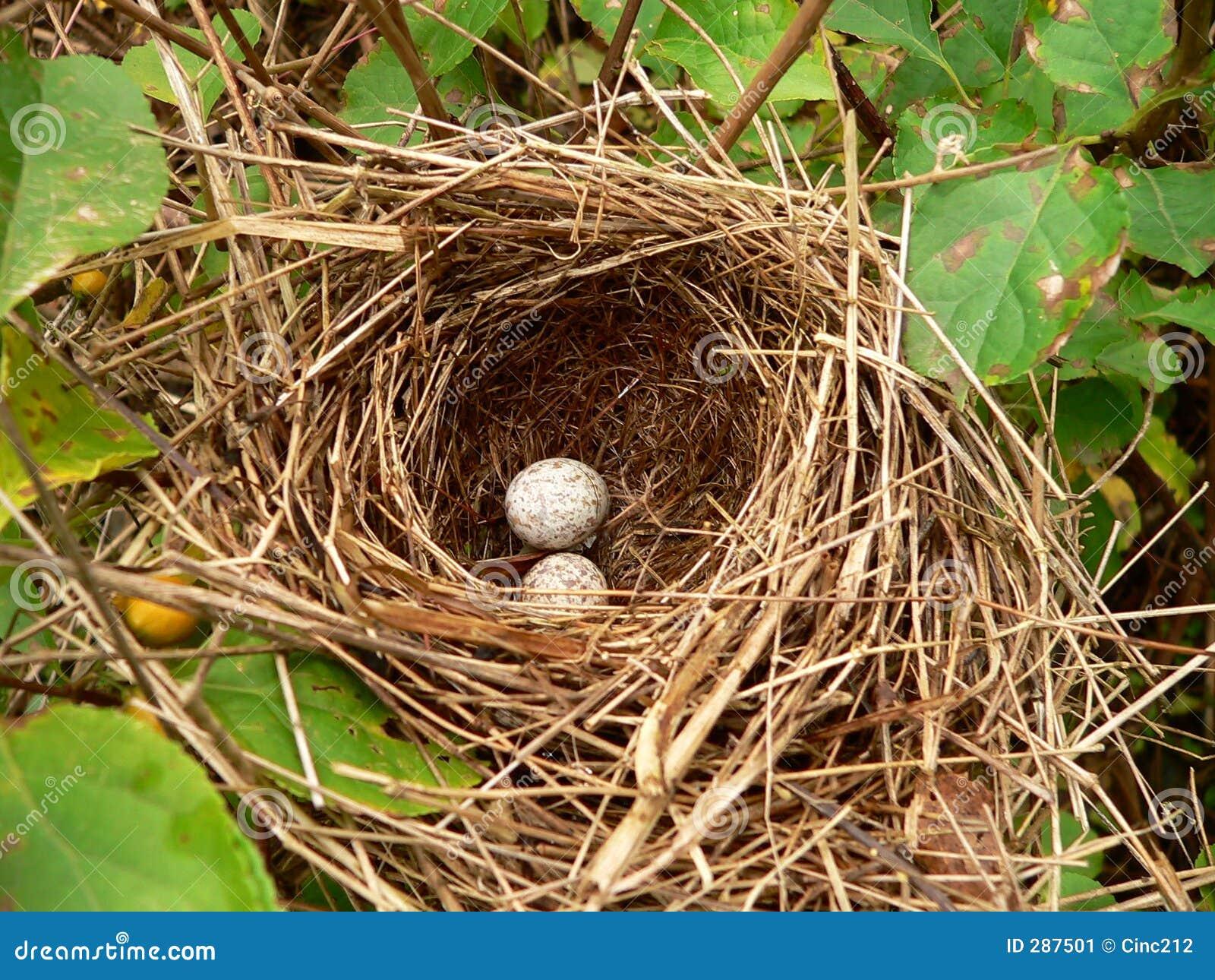 De Eieren van het nest