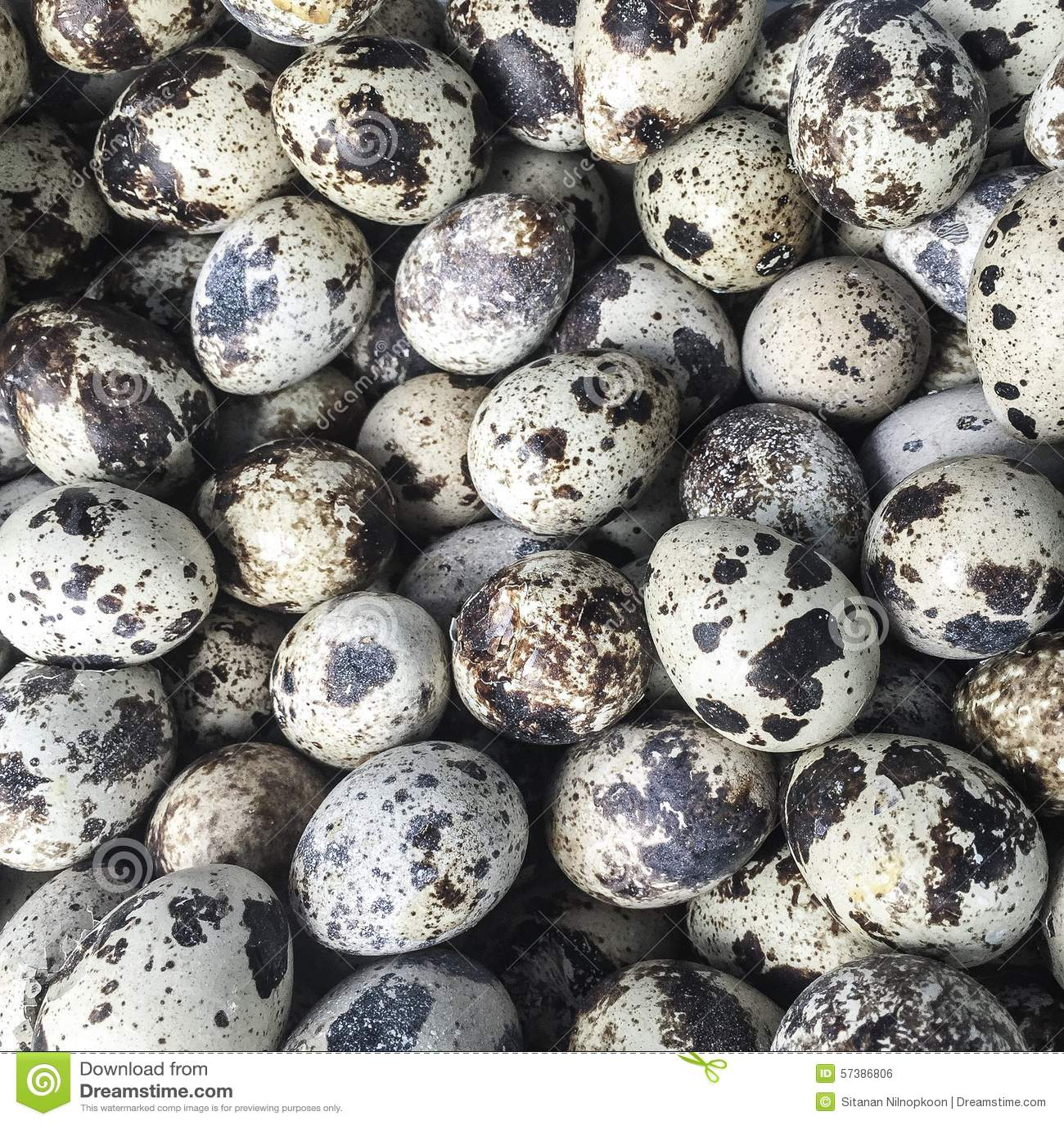 De eieren van kwartels