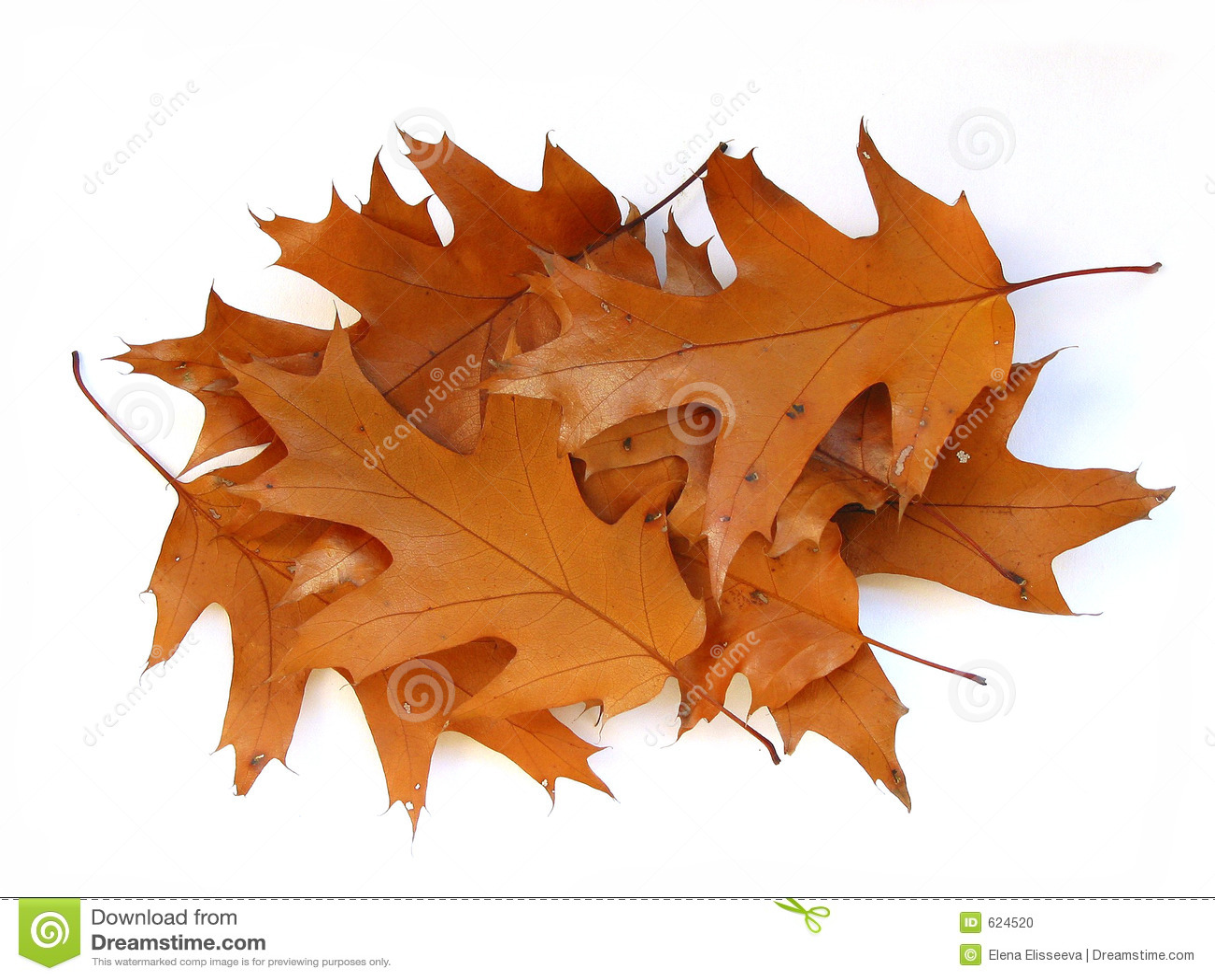 De eiken bladeren van de daling op witte achtergrond