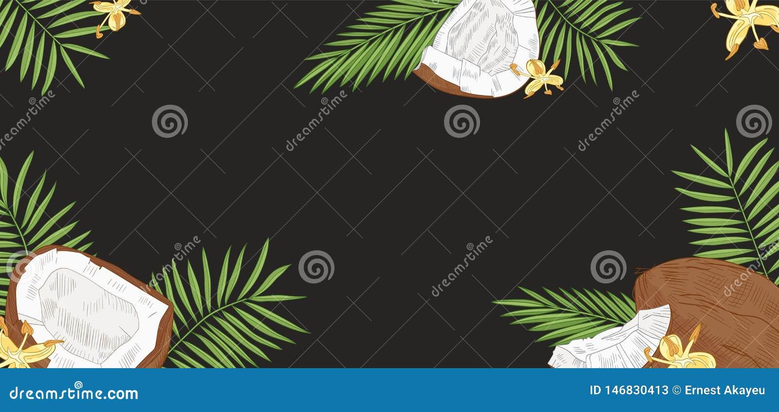 De elegante horizontale achtergrond met kokosnoten, palm gaat en bloeit op zwarte achtergrond weg Achtergrond met vers