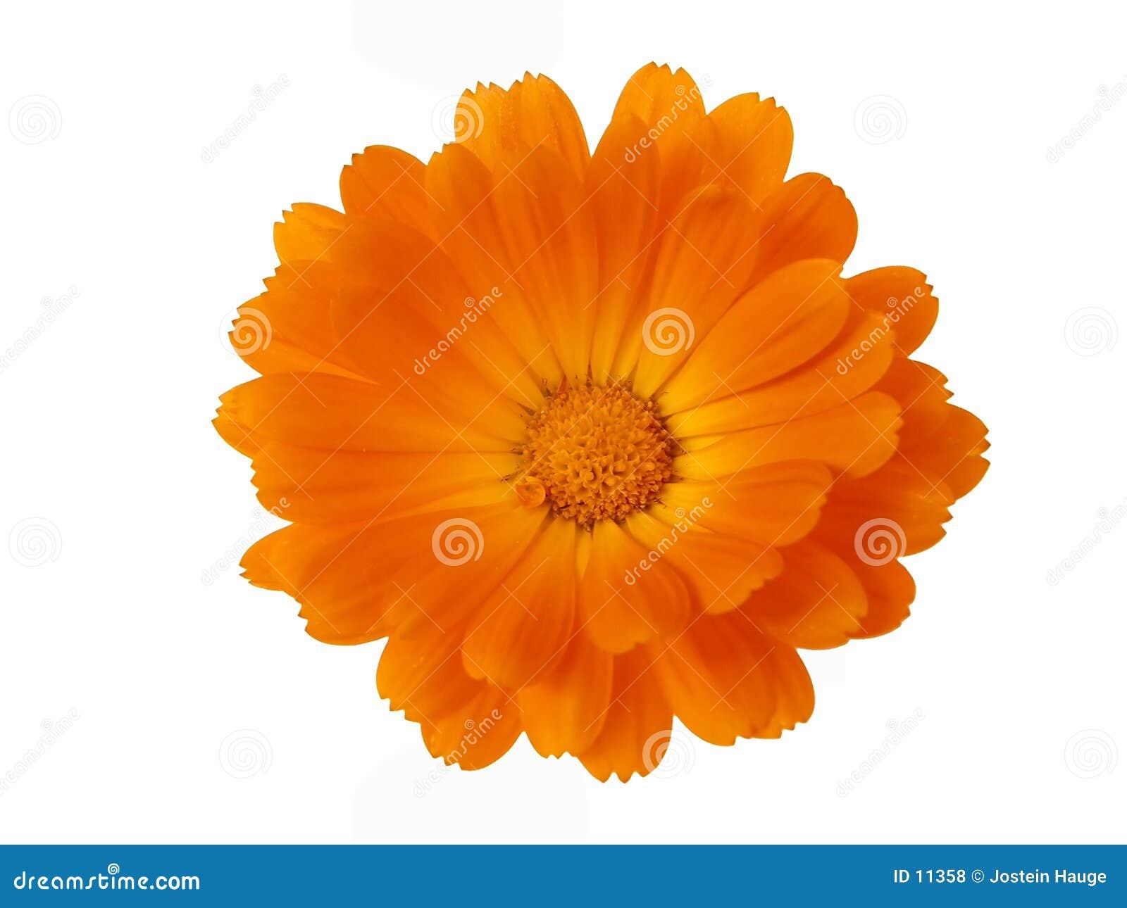 De Elementen van het ontwerp: Het Hoofd van de bloem