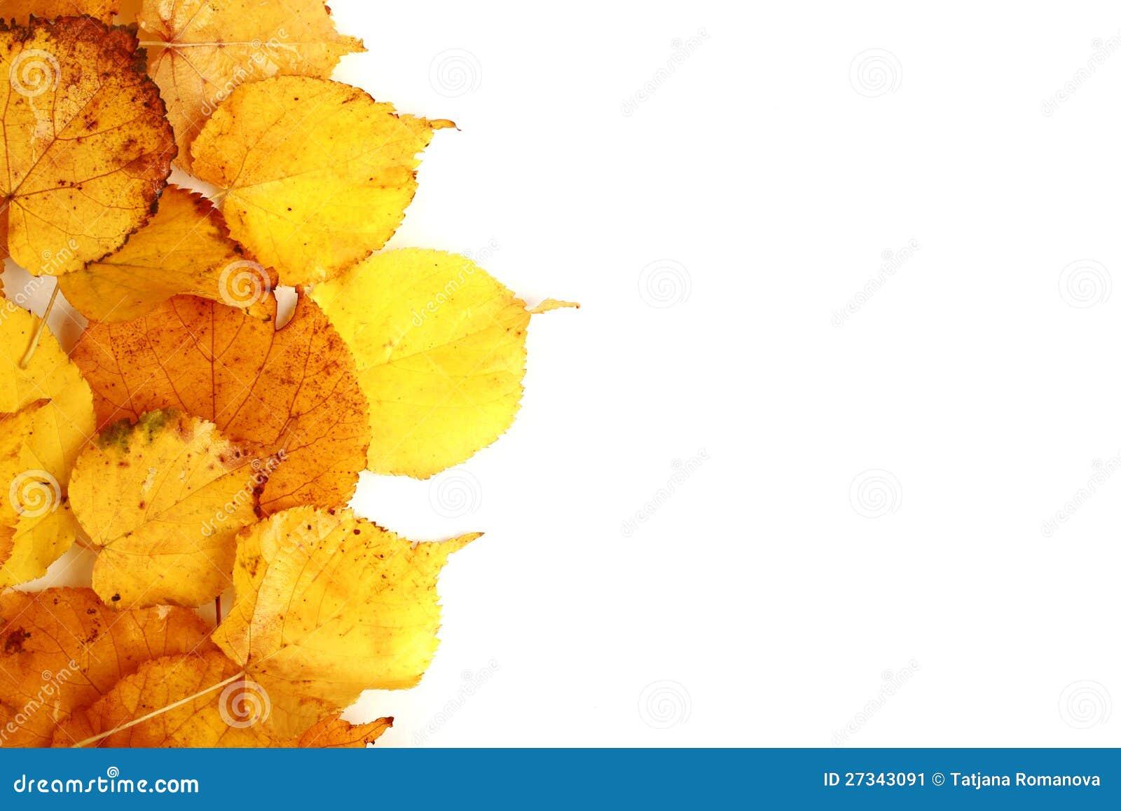 De esdoornbladeren van de herfst