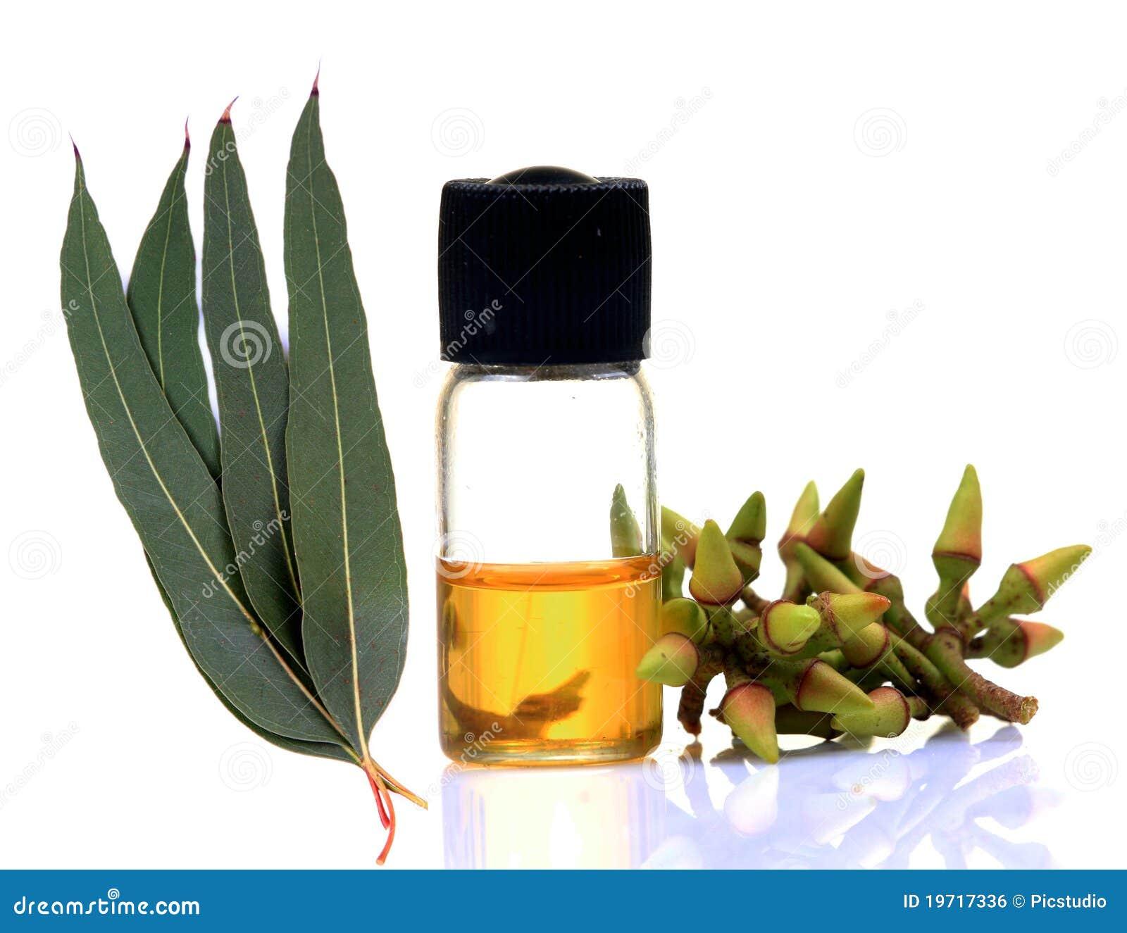 De eucalyptusolie van Ayurvedic