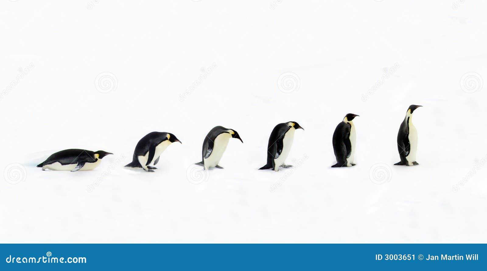 De Evolutie van de pinguïn