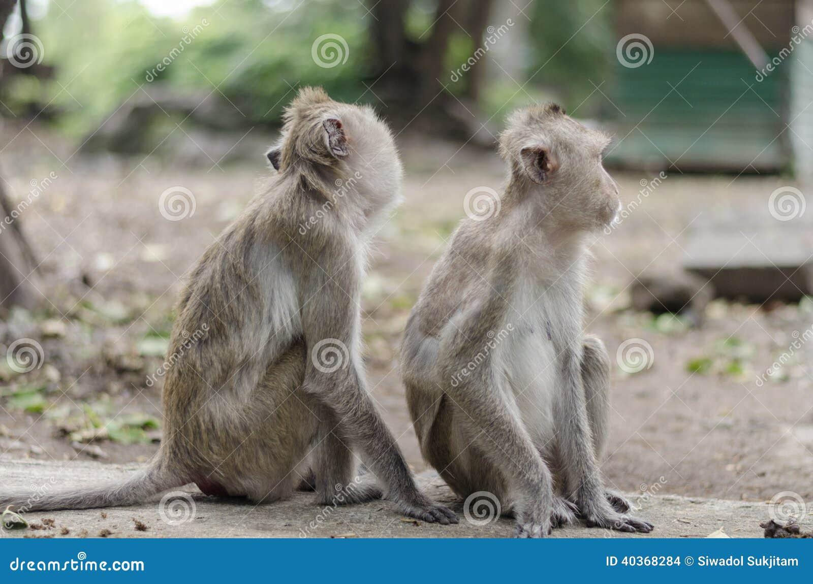 De familie van aap