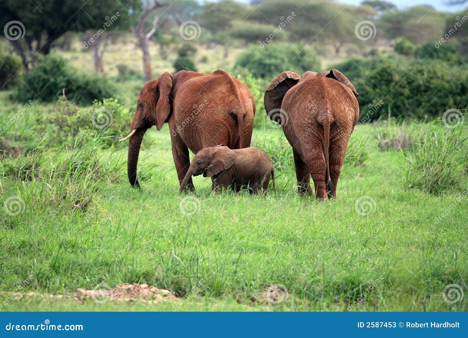 De familie van de olifant