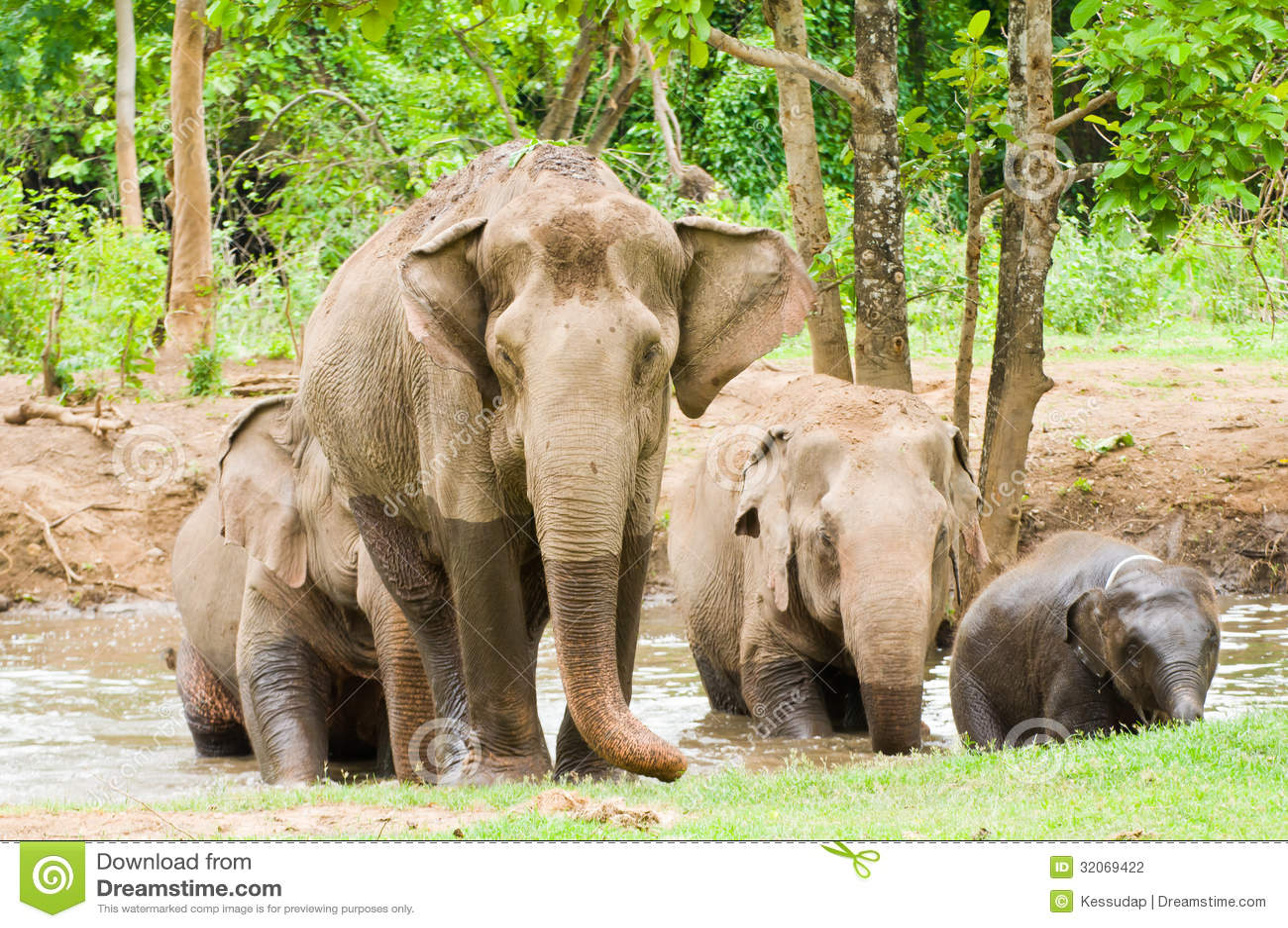 De familie van olifant in het bos