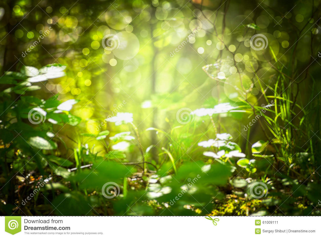 De focus blurred forest background grass and leaves for Silverleaf com
