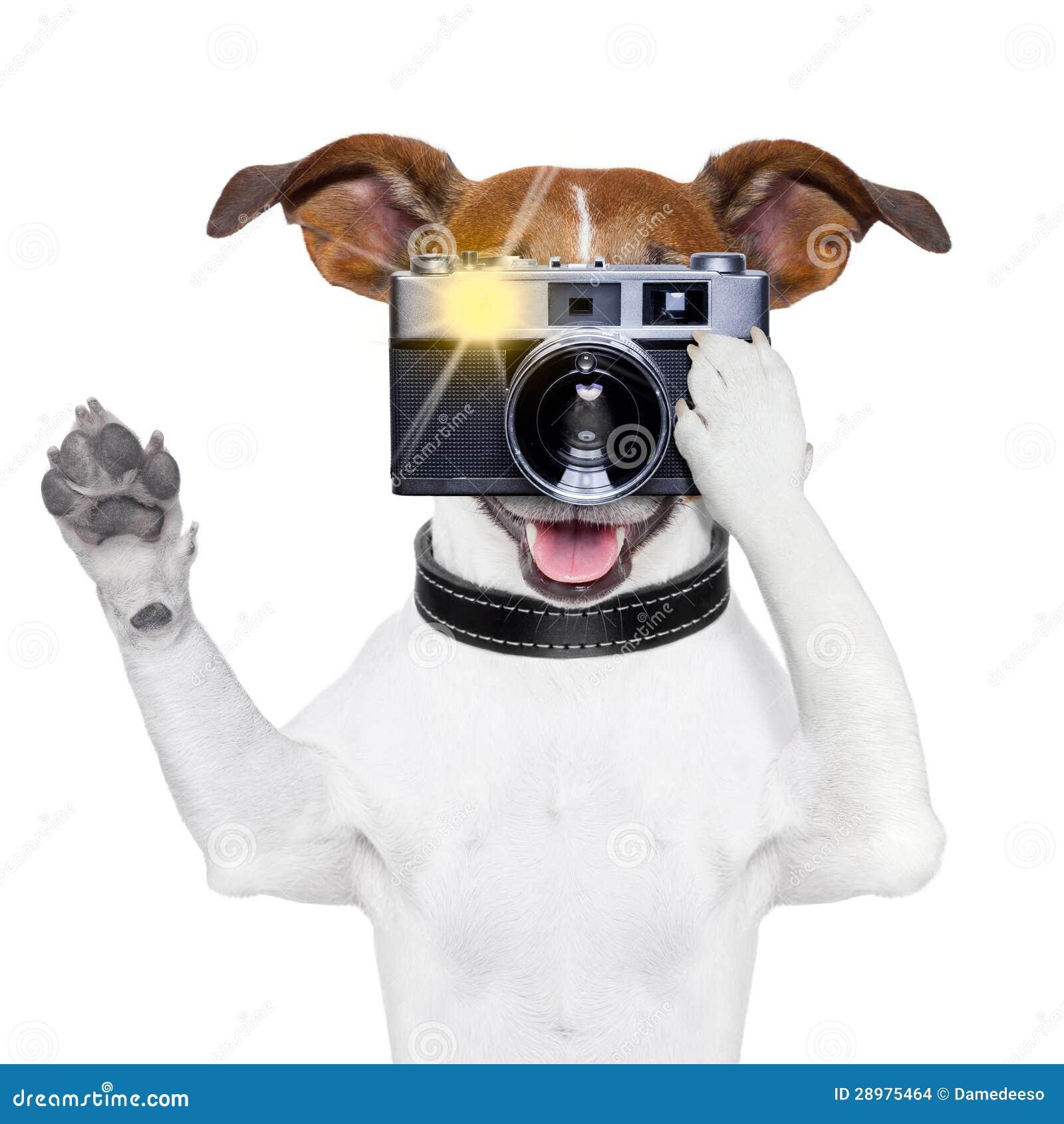 De foto van de hond