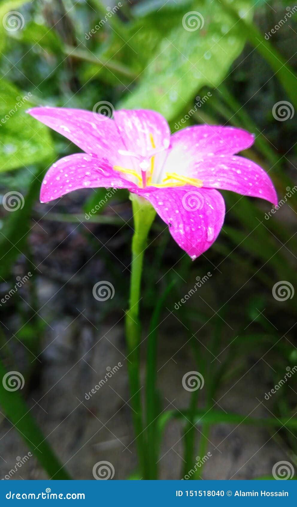 De foto van de regenbloem hd