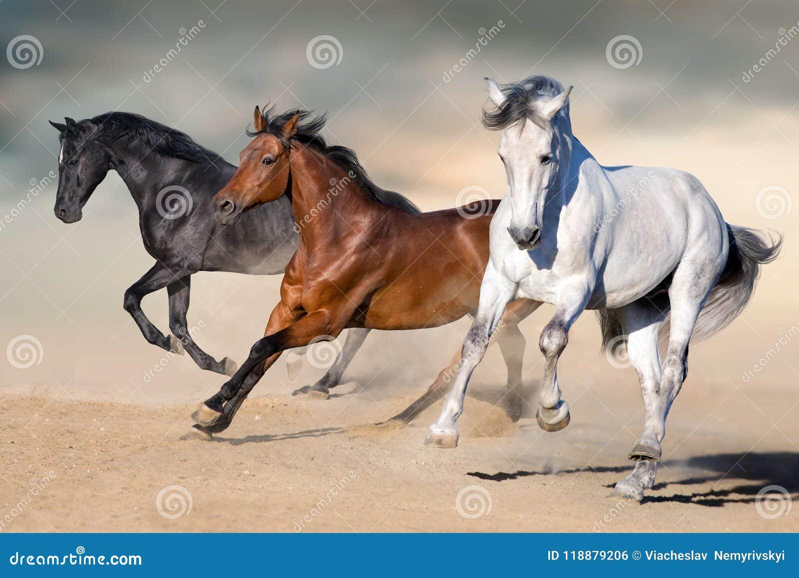 De galop van de paardenlooppas