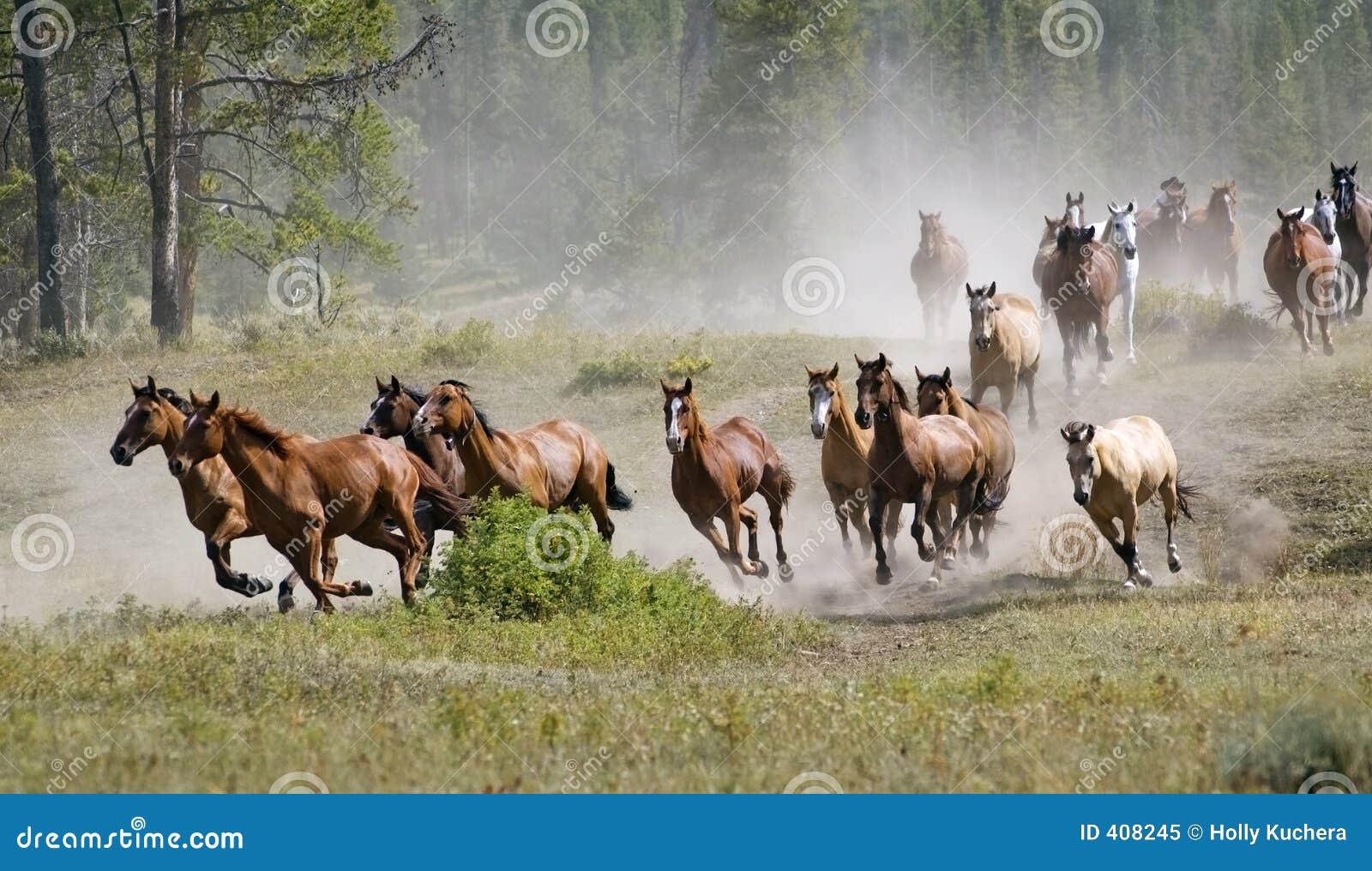 De galopperende Kudde van het Paard