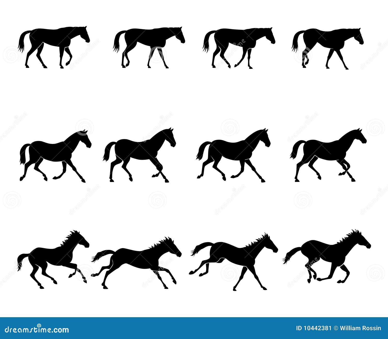 paard in de gang