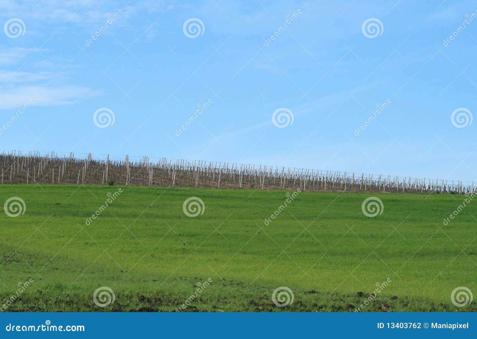 De gebieden en de wijngaarden van de hemel