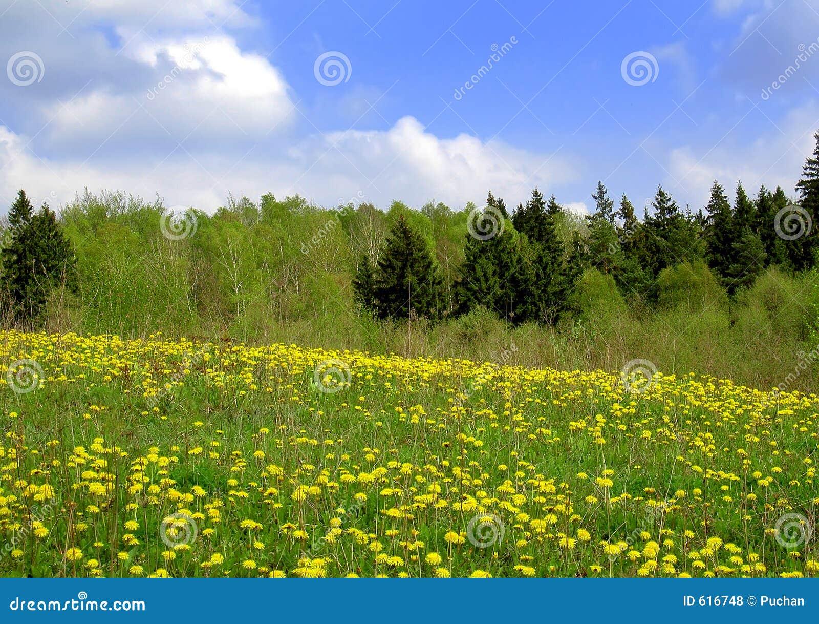 De gebieden van de lente