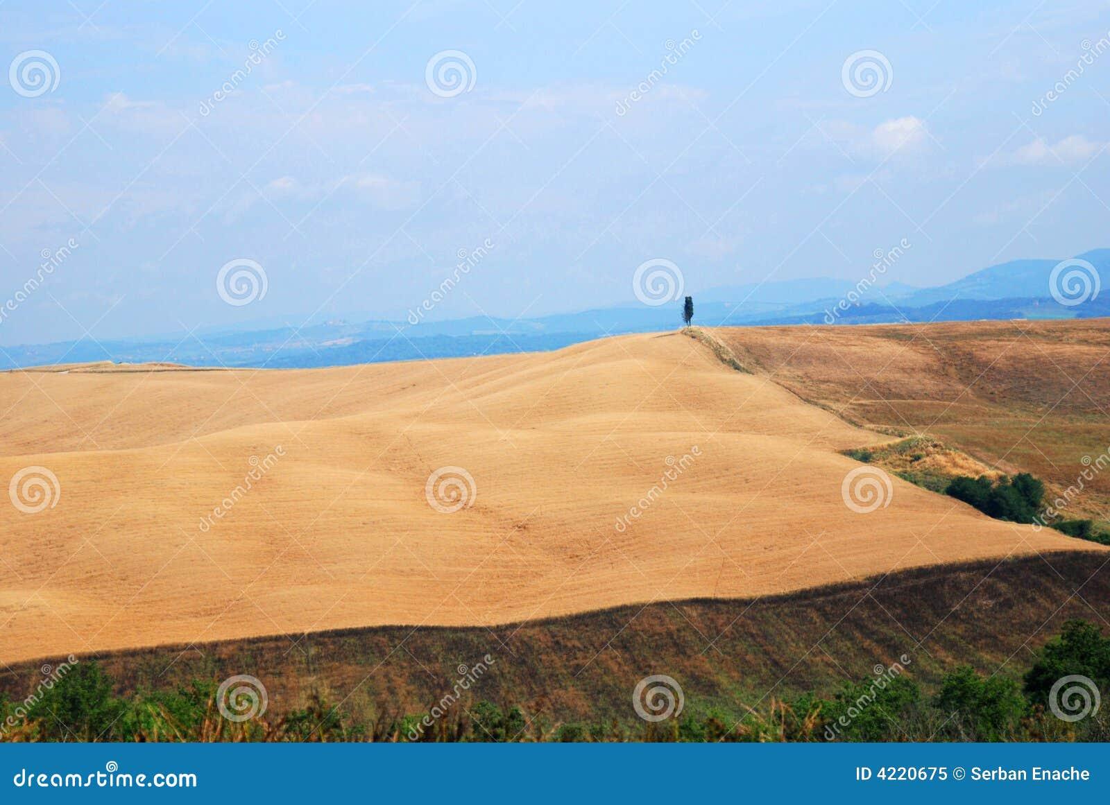 De Gebieden van de tarwe