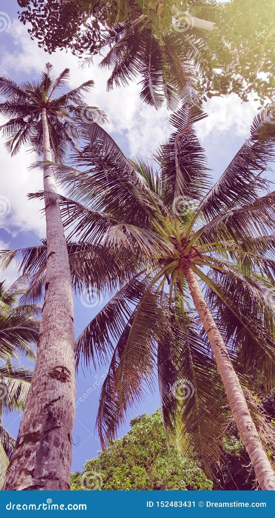 De gekke zomer vibes in Filippijnen