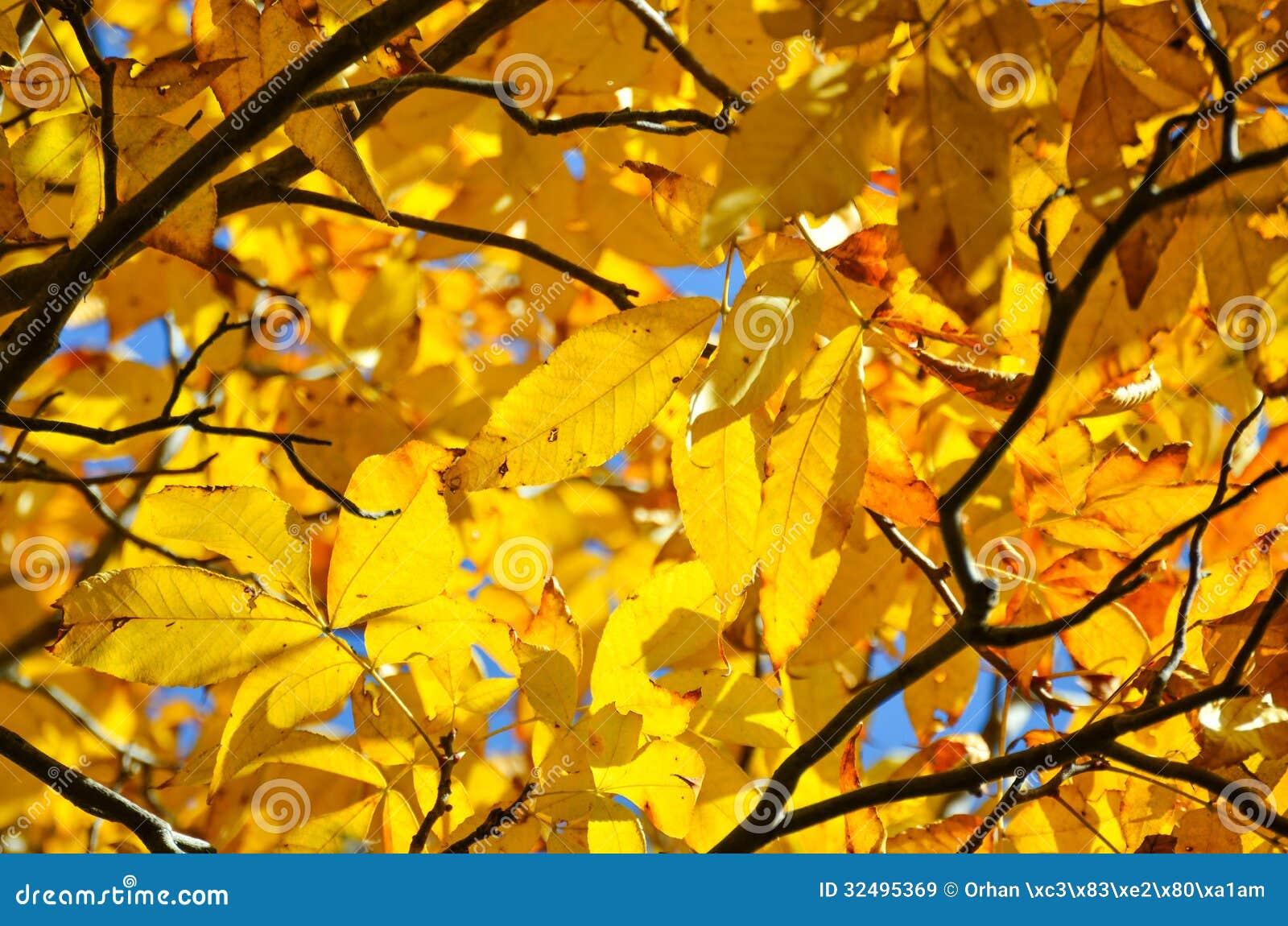 De Gele Achtergrond Van De Herfstbladeren Royalty-vrije Stock ...