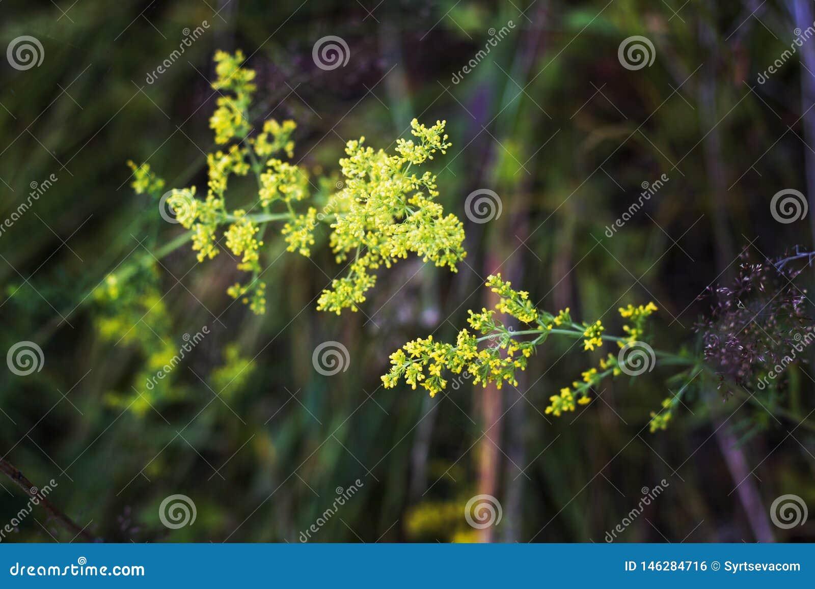 De gele bloemen sluiten omhoog op groene achtergrond
