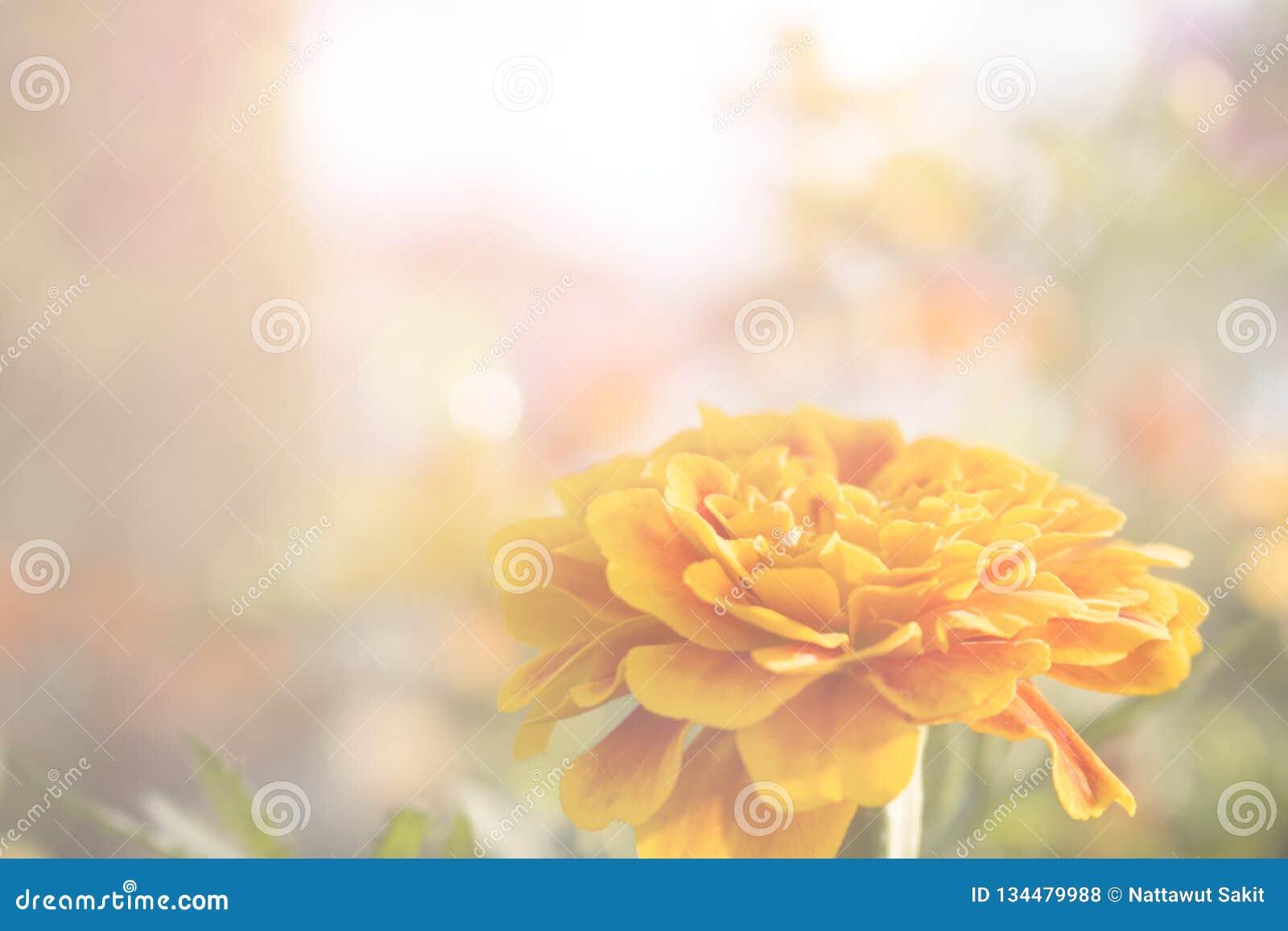 De gele bloemen zijn bloeiend voor de achtergrond