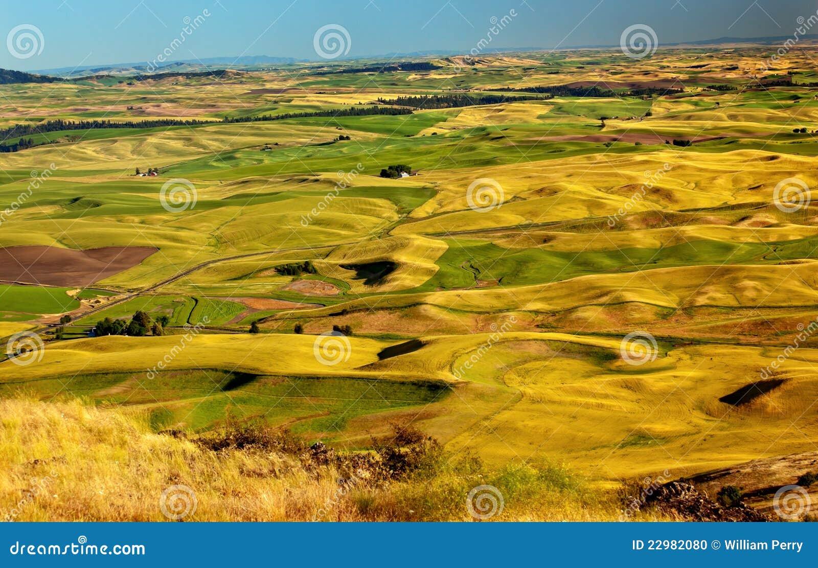 De gele Landbouwbedrijven Palouse Washington van de Gebieden van de Tarwe