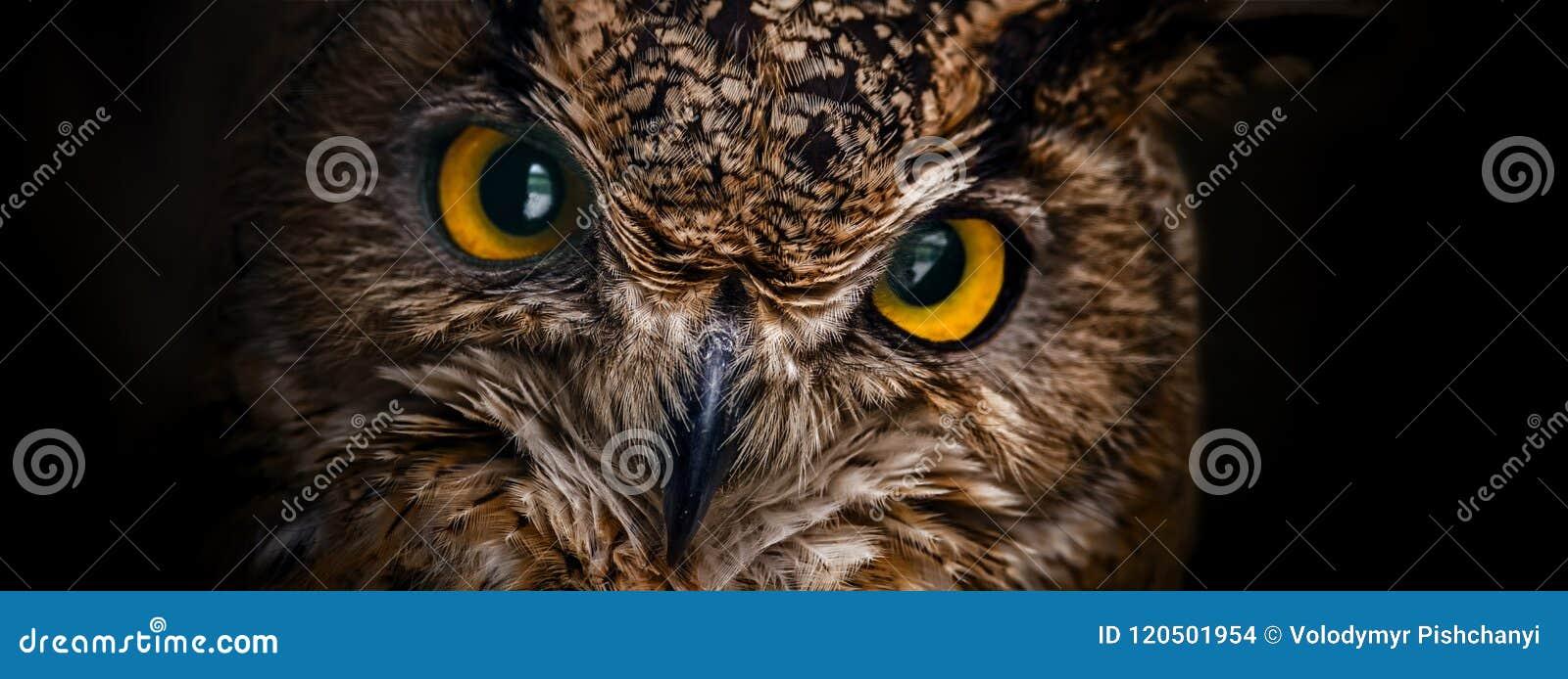 De gele ogen van gehoornde uil sluiten omhoog op een donkere achtergrond