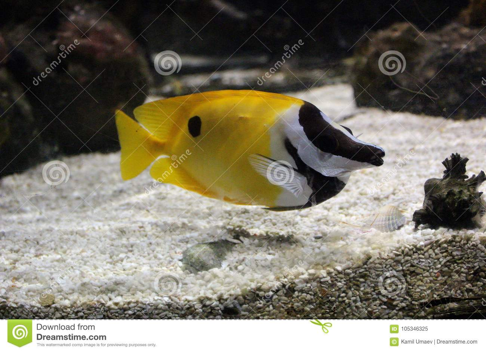 De gele vissen in de oceaan